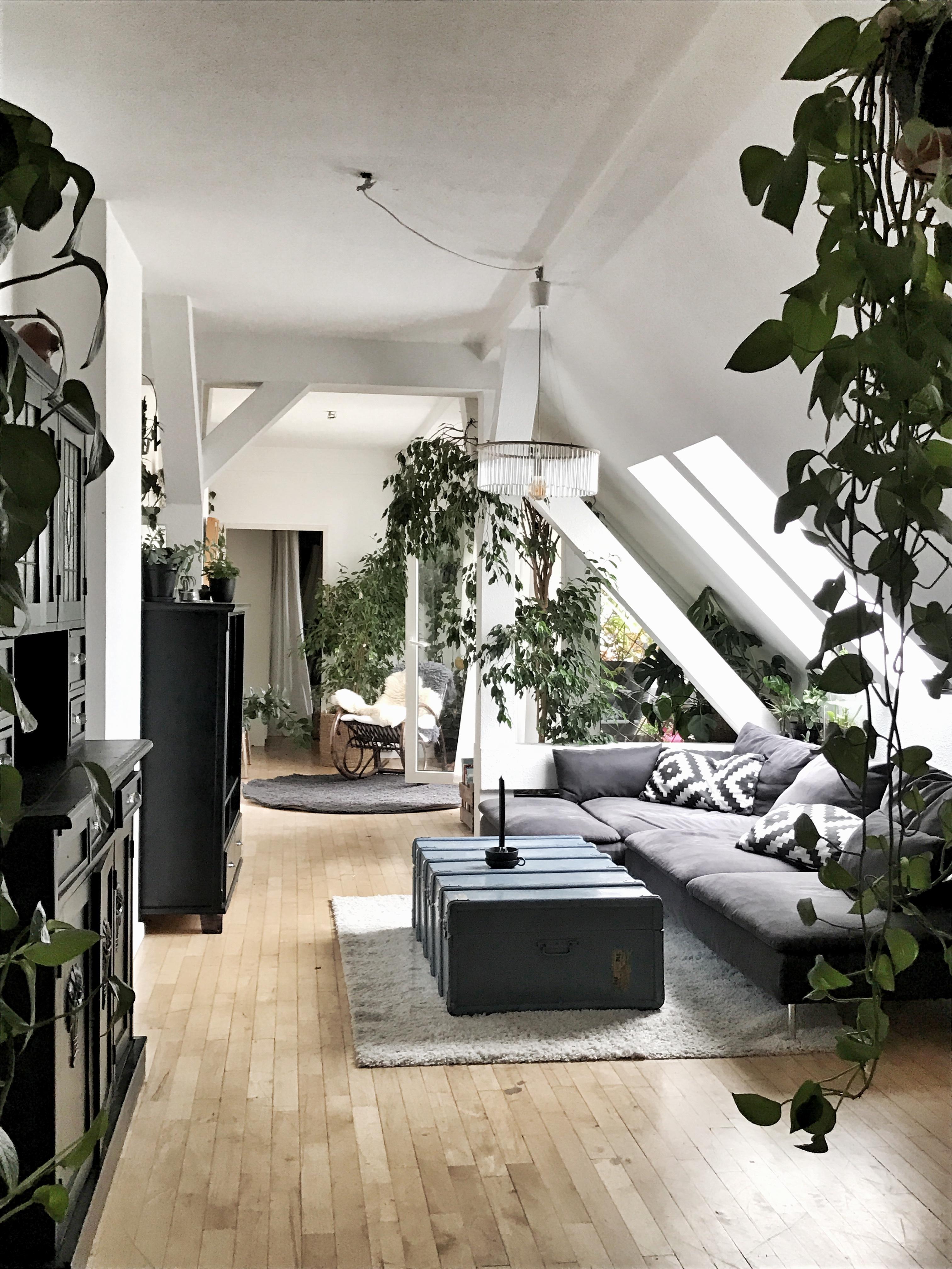 livingchallenge #livingroom #urbanjungle #pflanzen ...