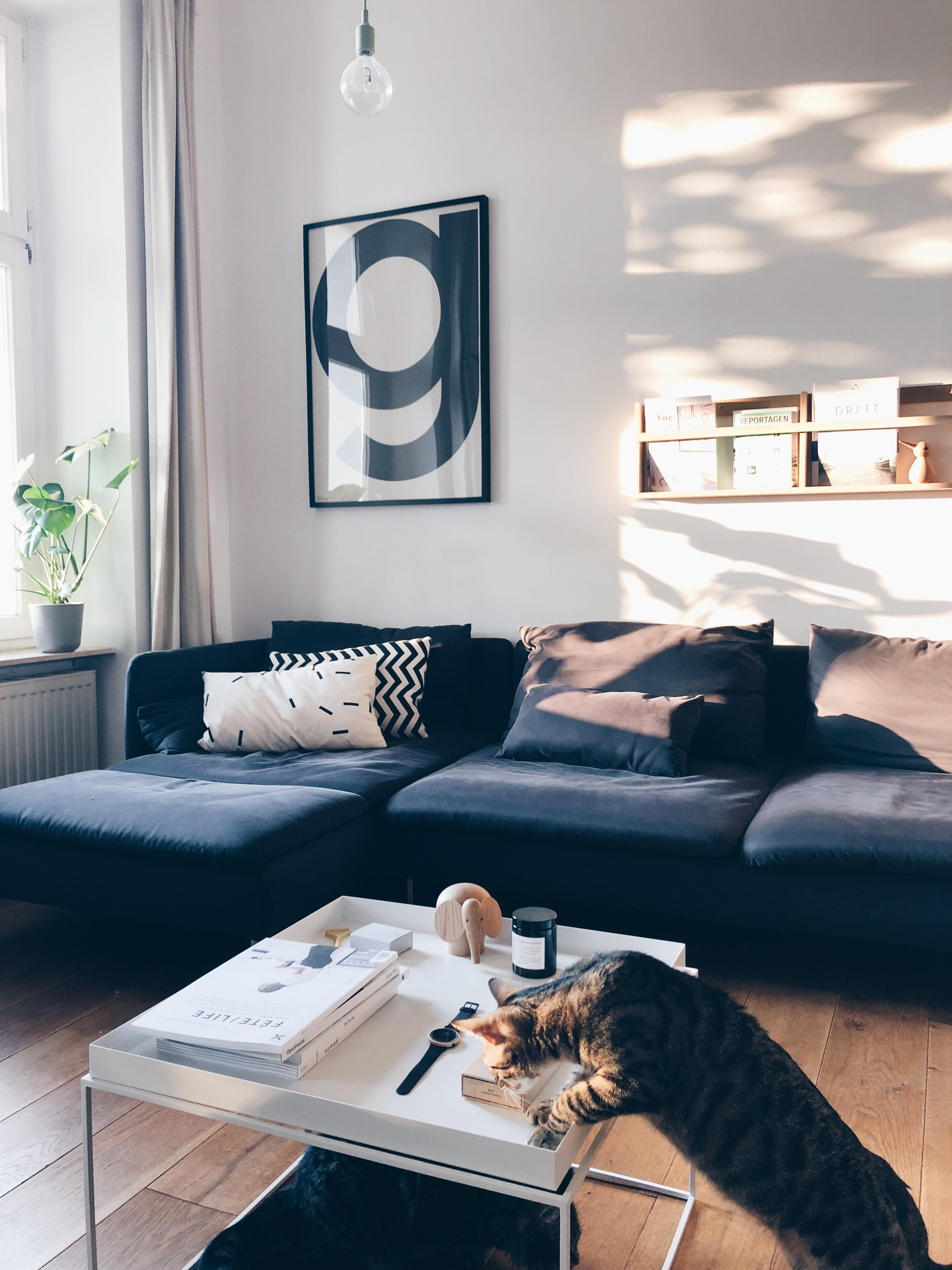 #livingroom #eveninglight #cats #scandinaviandesign
