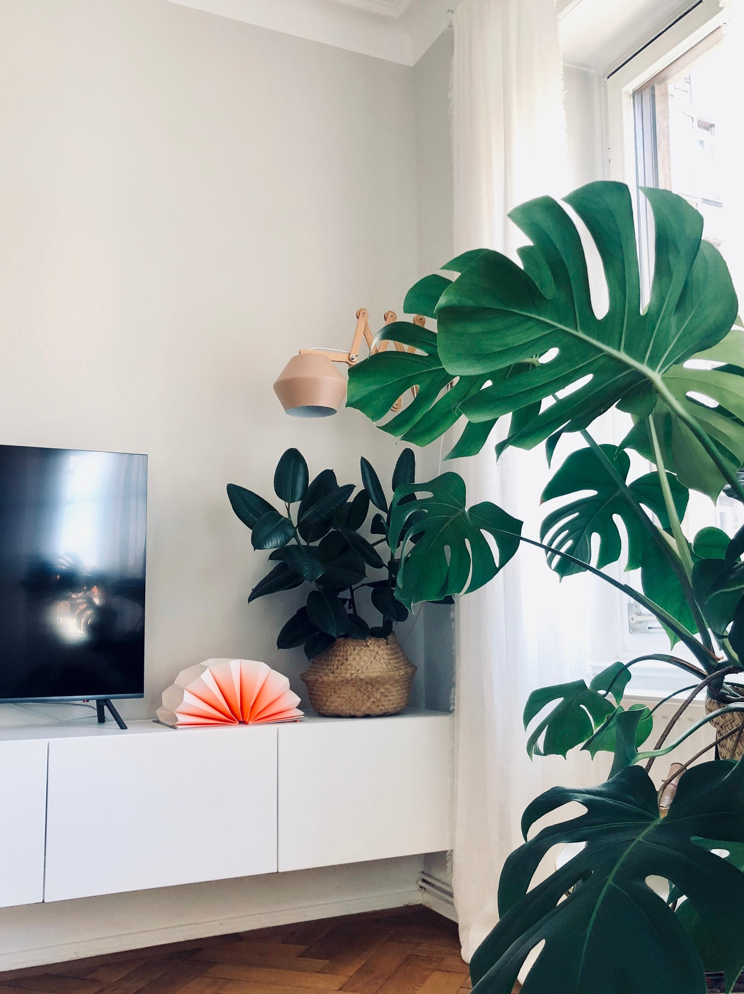 livingroom jungle