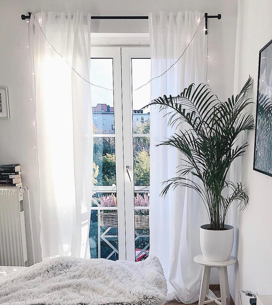 Mein wg zimmer in greifswald  student couchstyle couchmagazin schlafzimmer vorhang fenster palme  868b60cf de54 4610 b4fa 6a93543a5141