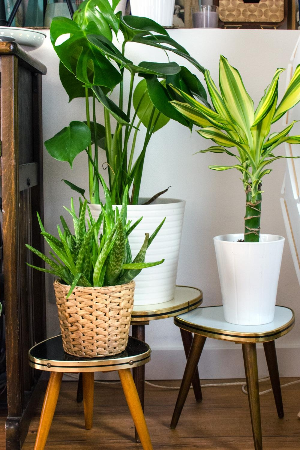 Midcentury Blumenhocker für den Urban Jungle. Monstera & Co. #plants #indoorplants #pflanzen #boho #monstera #midcentury