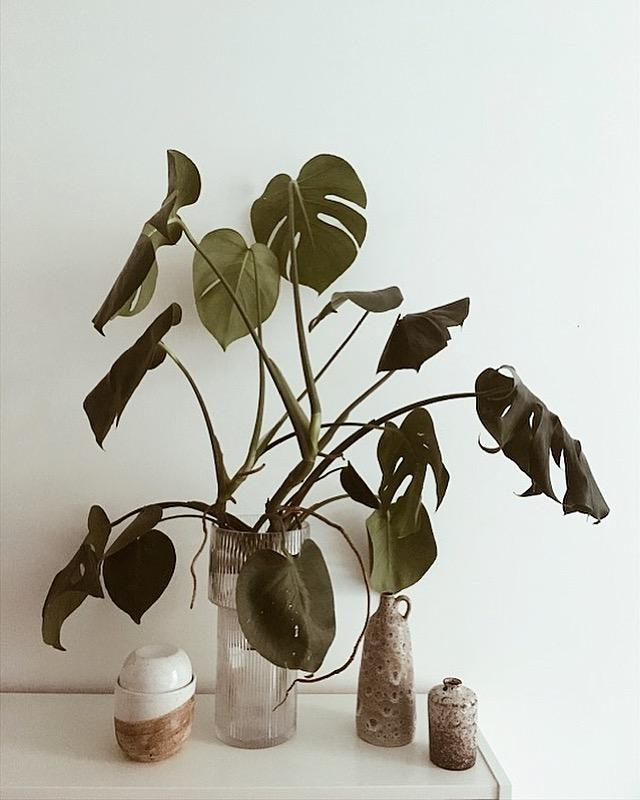 Monstera... #pflanzenliebe #monstera #glasvase #monsteraindeevase #keramikdose #keramik #flohmarktfund