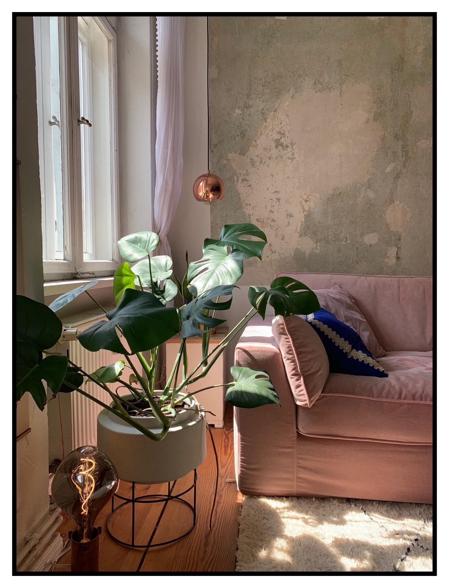 #monstera #sun #livingroom