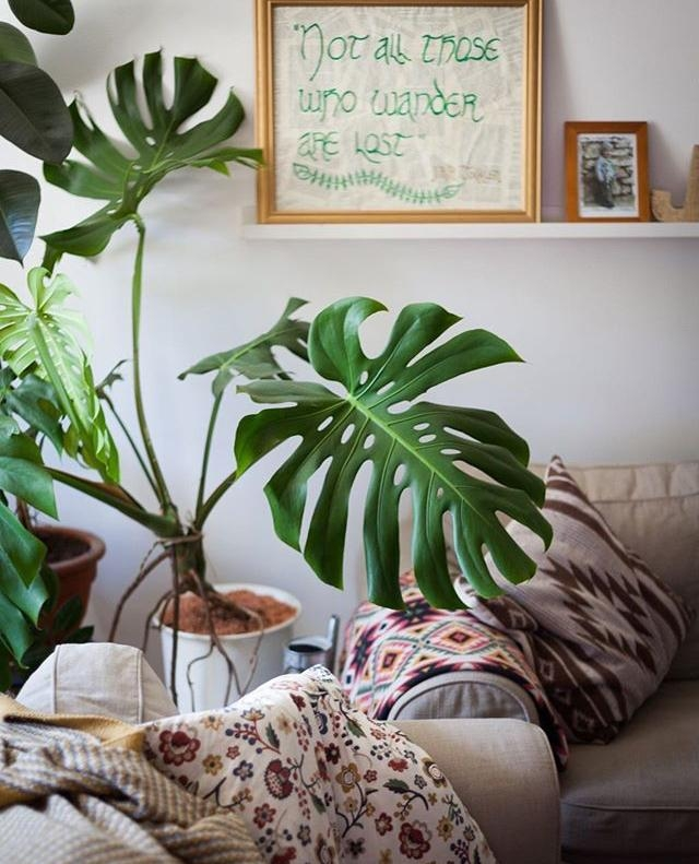 #monstera #urbanjungle