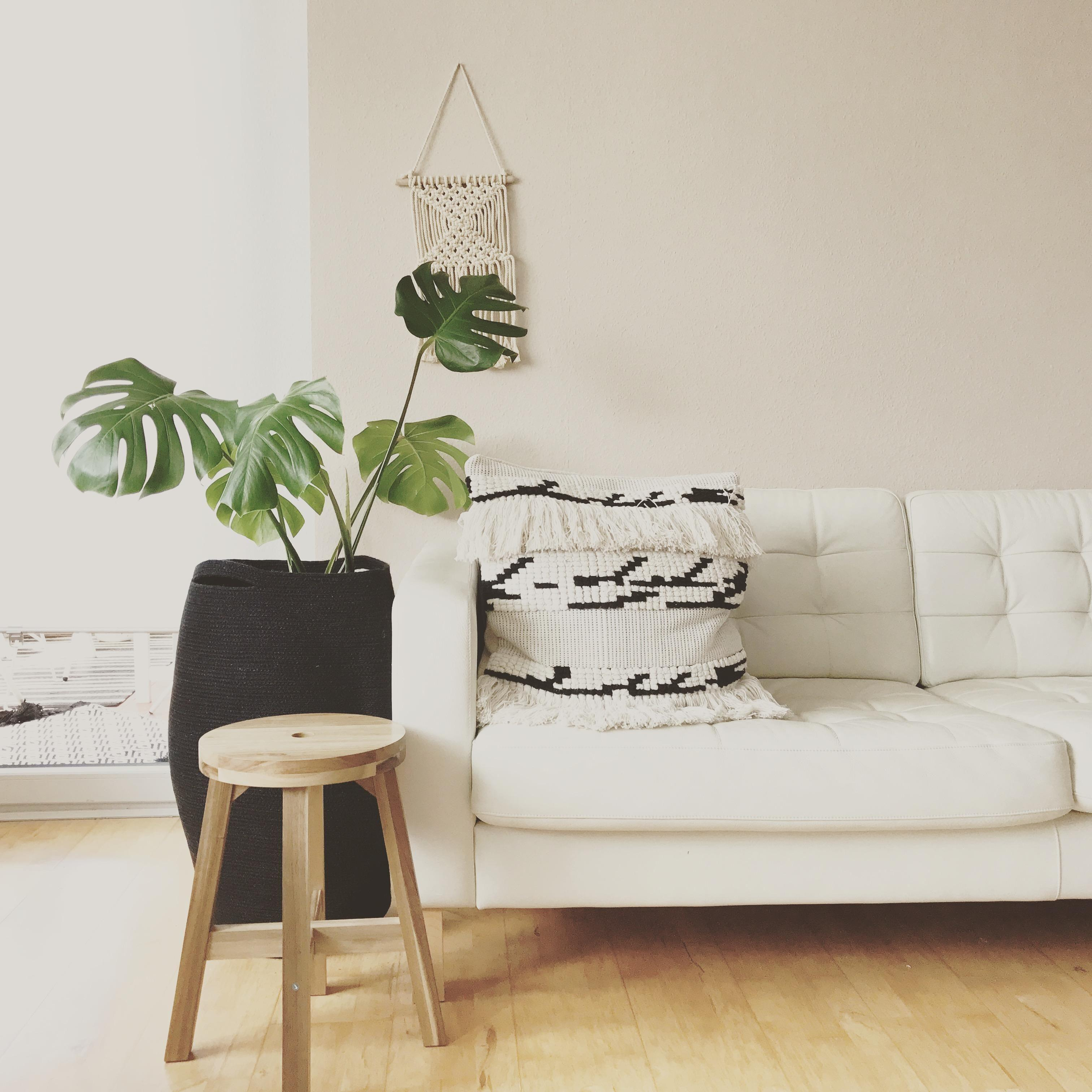 Monsteraliebe.