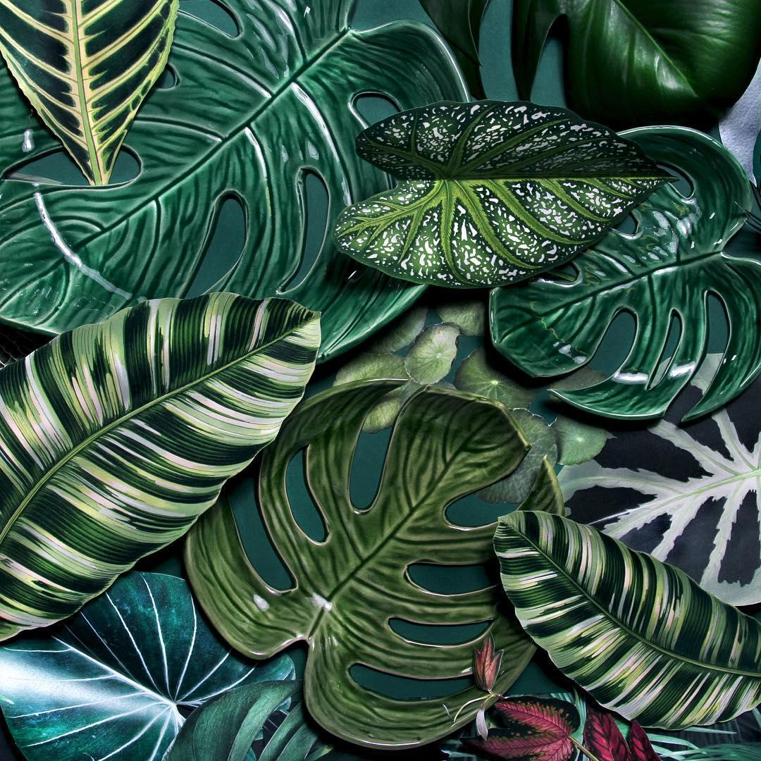 Monsteraliebe