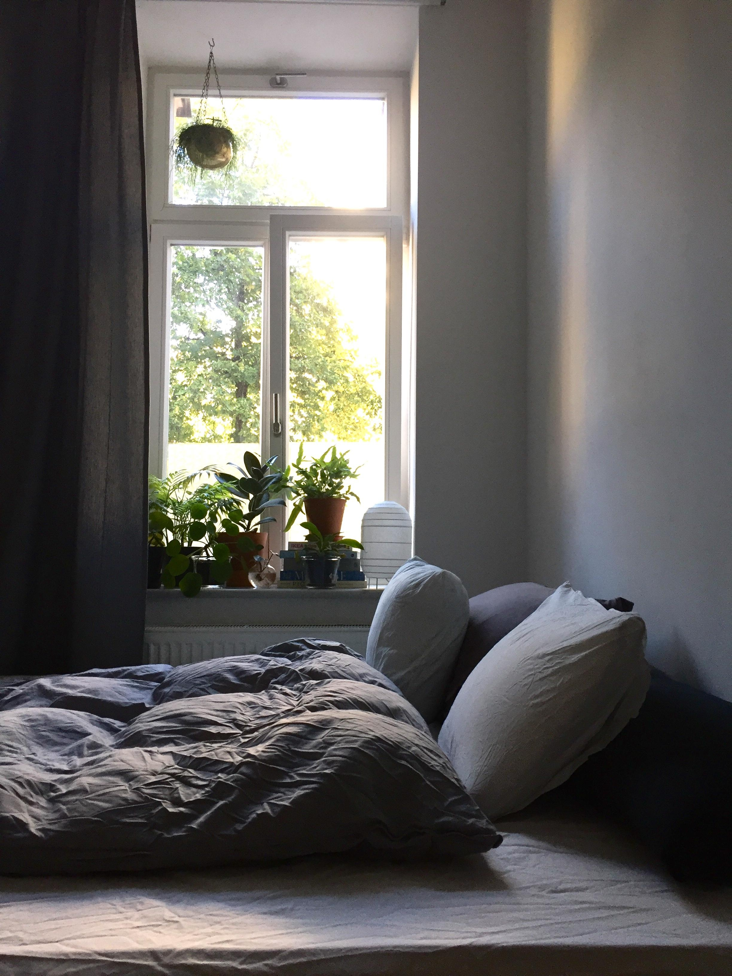 Morgensonne 