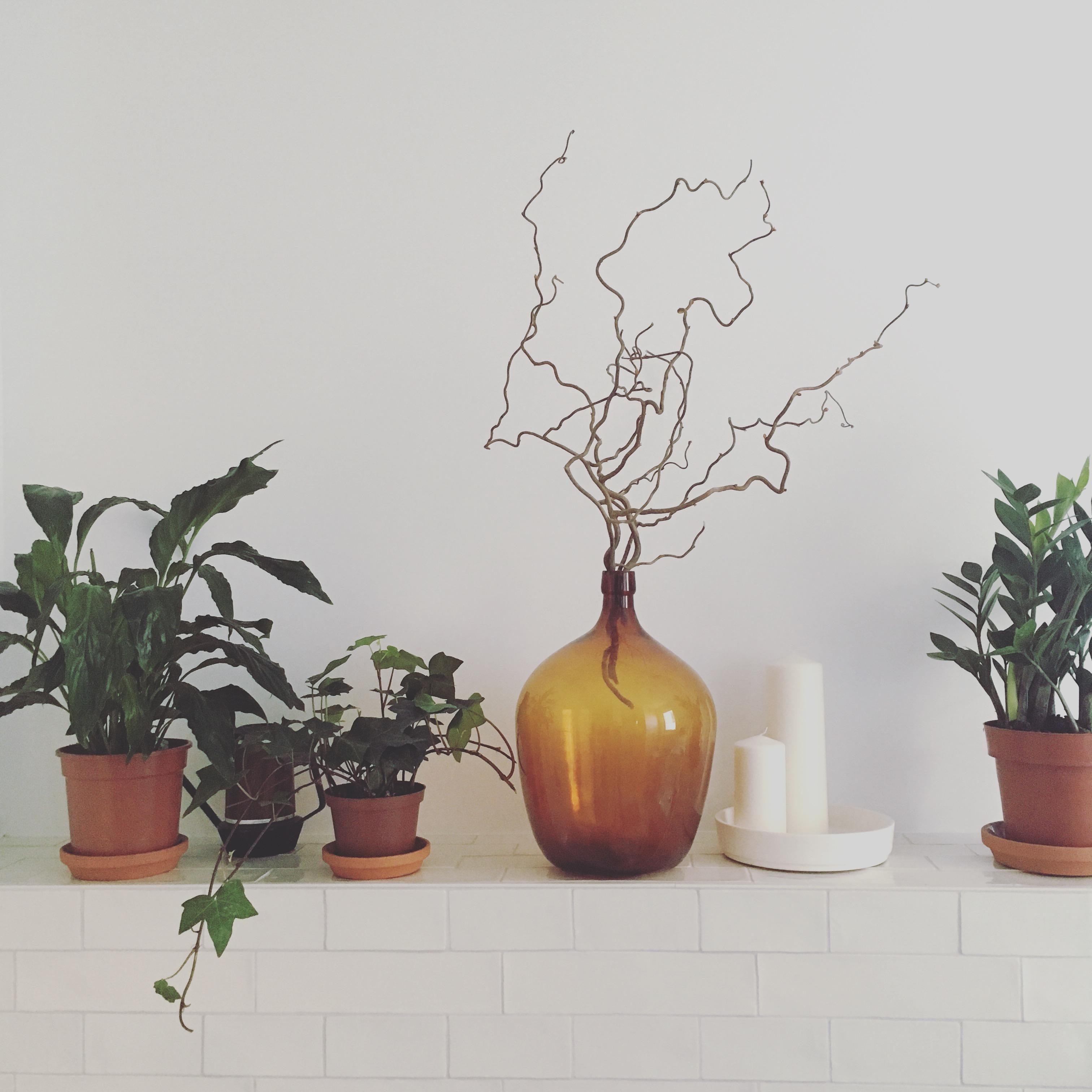 Neue Pflanzen Im Bad Toi Toi Toi Dass Sie Uberlebe