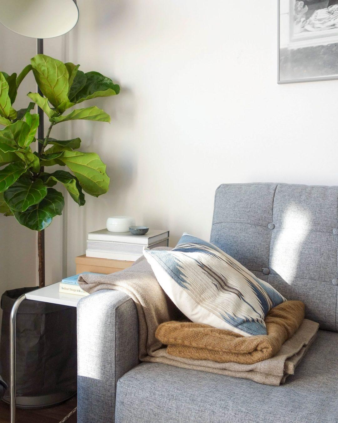 Neuer #Fiddle leaf fig tree in der #Sofaecke.