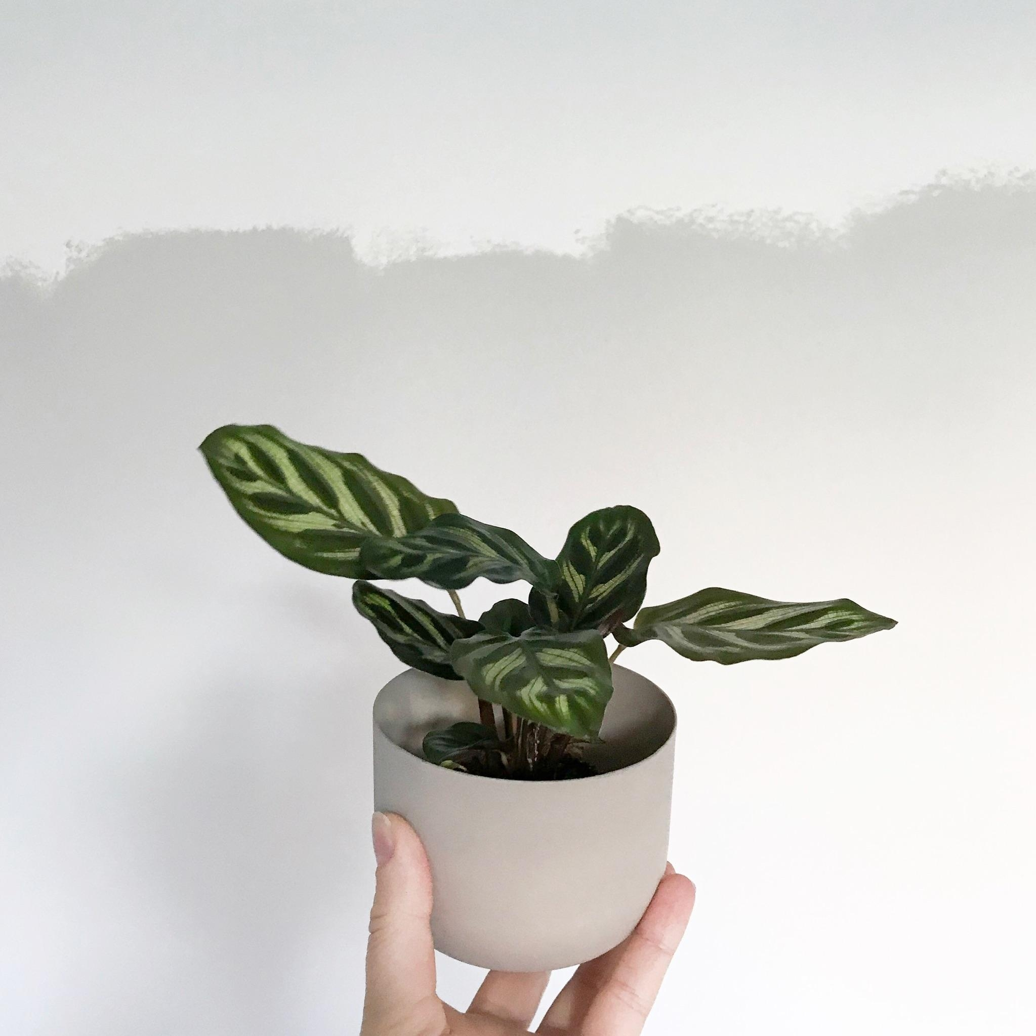 Neues Familienmitglied! 