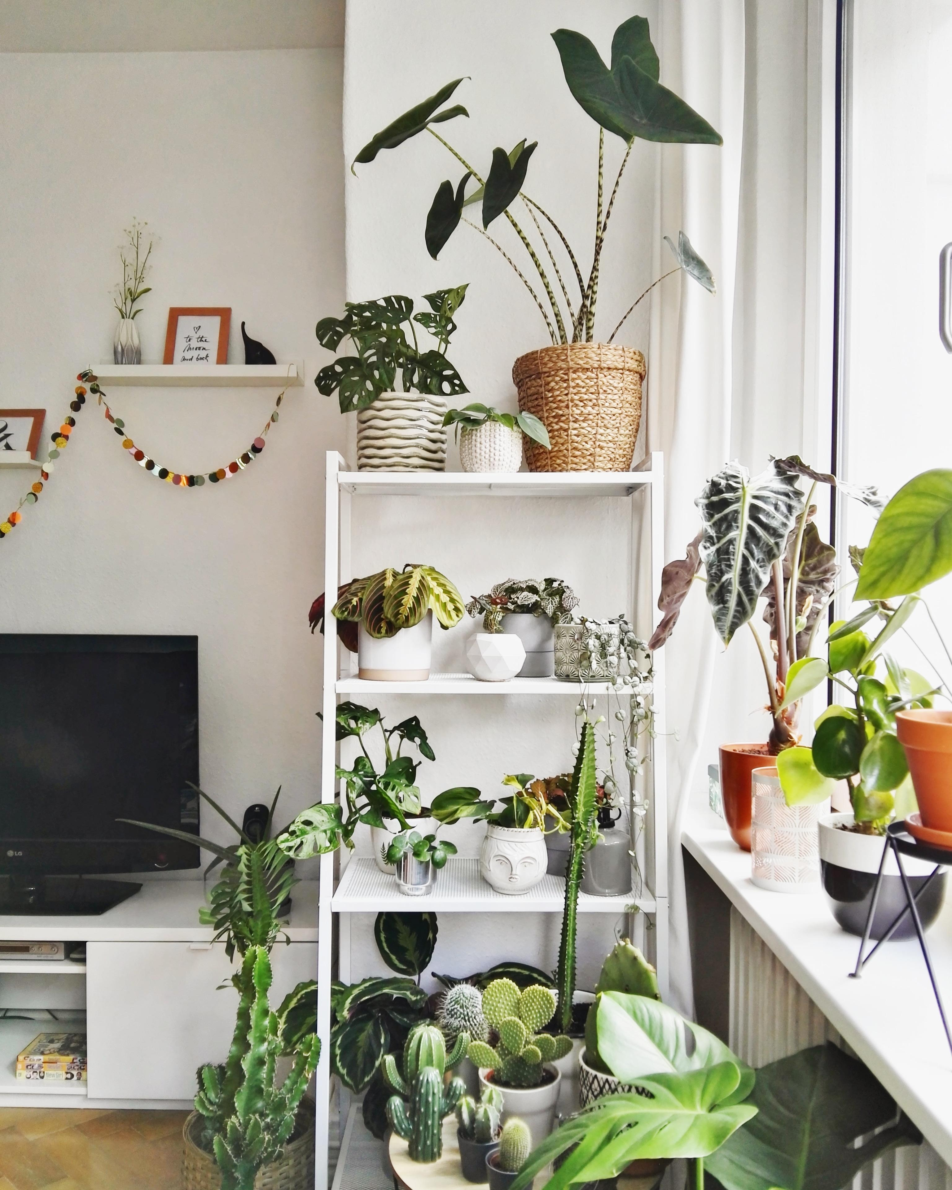 Neues Pflanzenregal #plantshelfie #interior #livingroom #urbanjungle #plantlover #plantgang