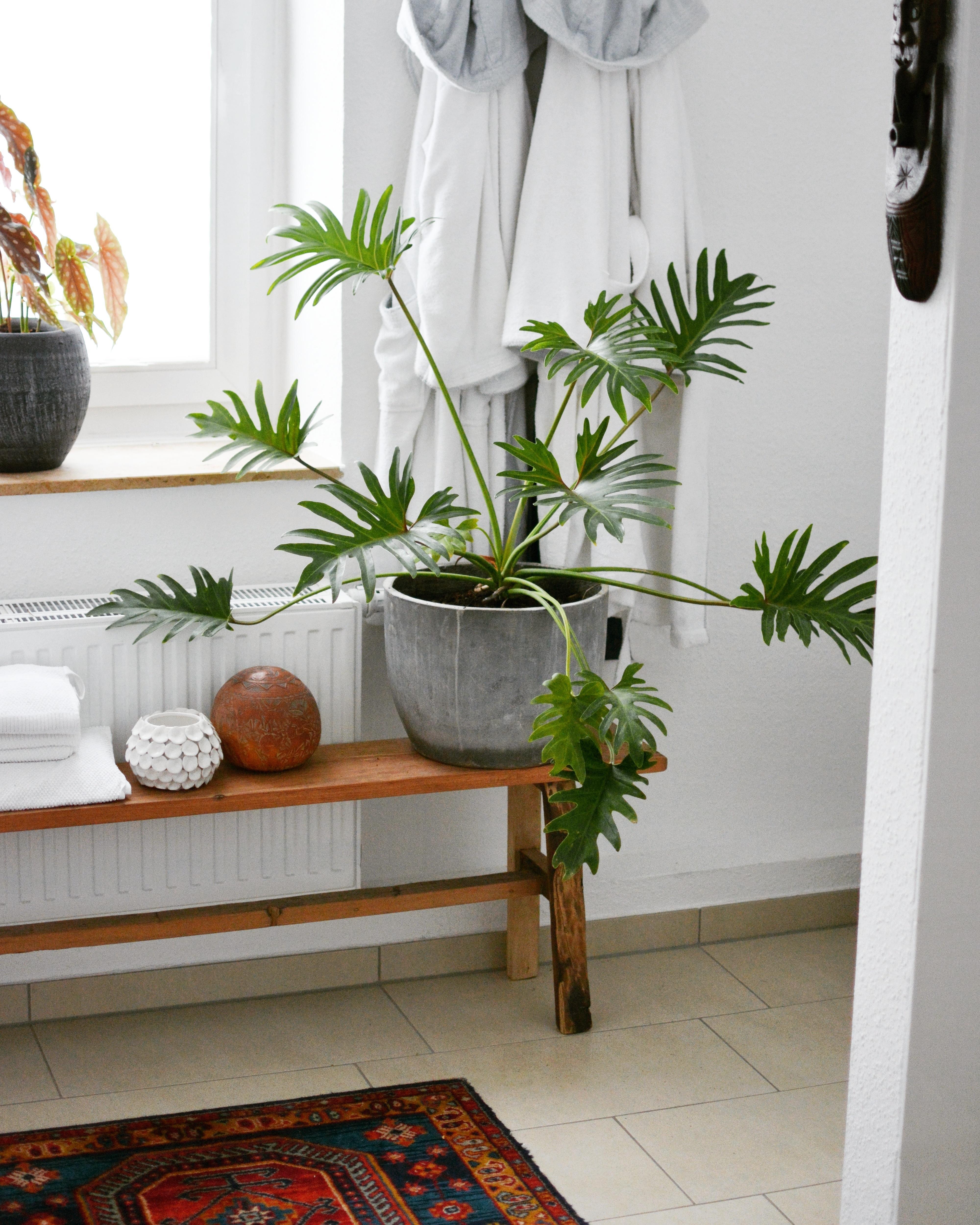 minimalistisch wohnen bilder ideen couch. Black Bedroom Furniture Sets. Home Design Ideas