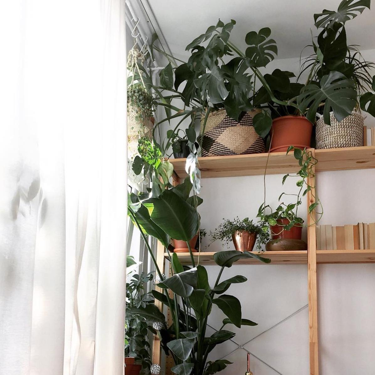 Ohne Pflanzen geht nichts! 🌿🌱🍃🌵 #monstera #Pflanzen ...