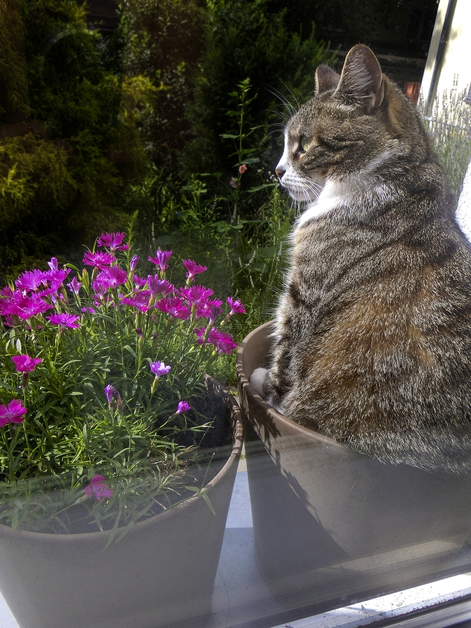 Hngende zimmerpflanzen deko ideen blumenampel topfpflanzen - Katzen giftige zimmerpflanzen bilder ...