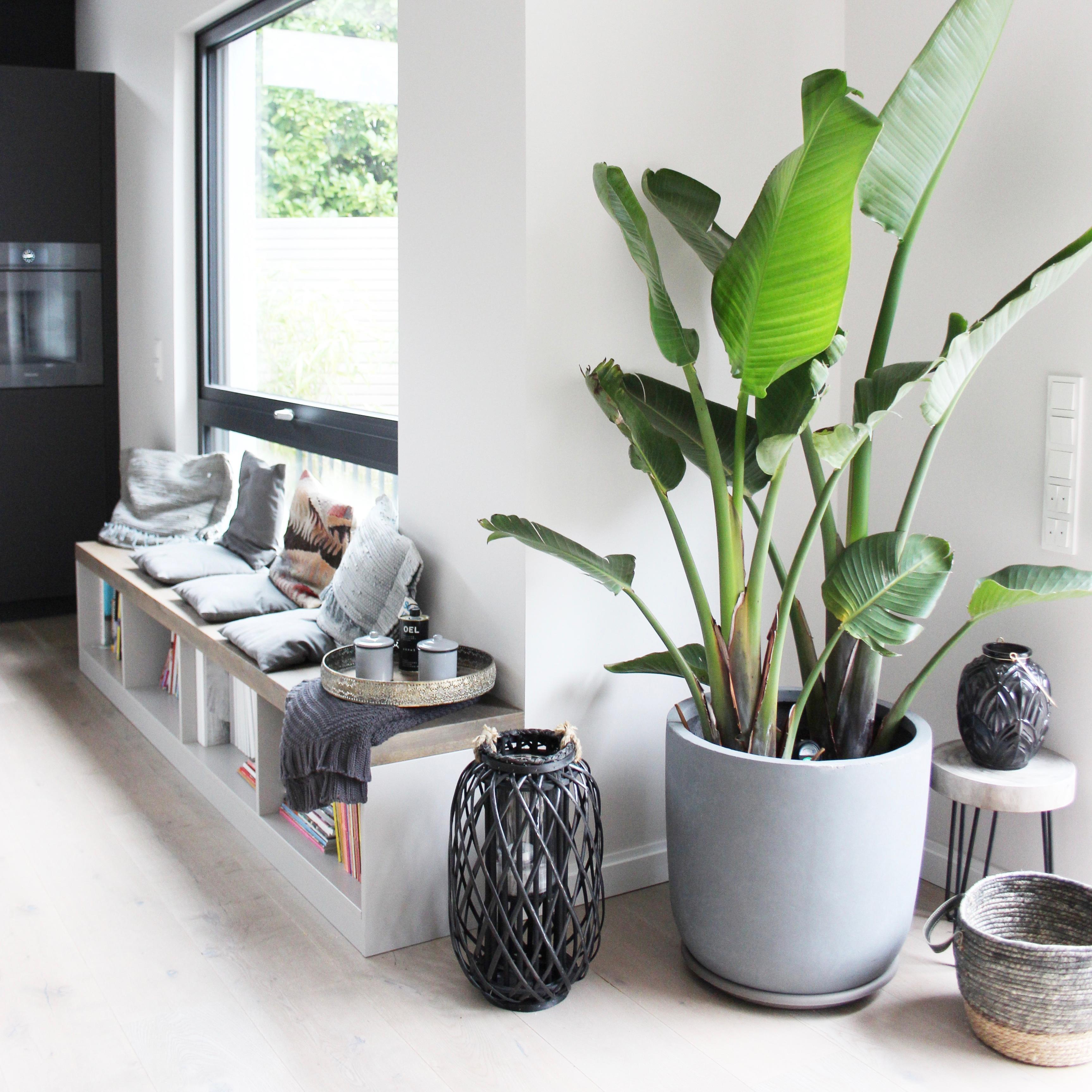 Pflanzen Erhellen Den Tag Interiorinspo Livin