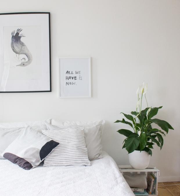 Pflanzen im Schlafzimmer verbessern das Schlafklima ...