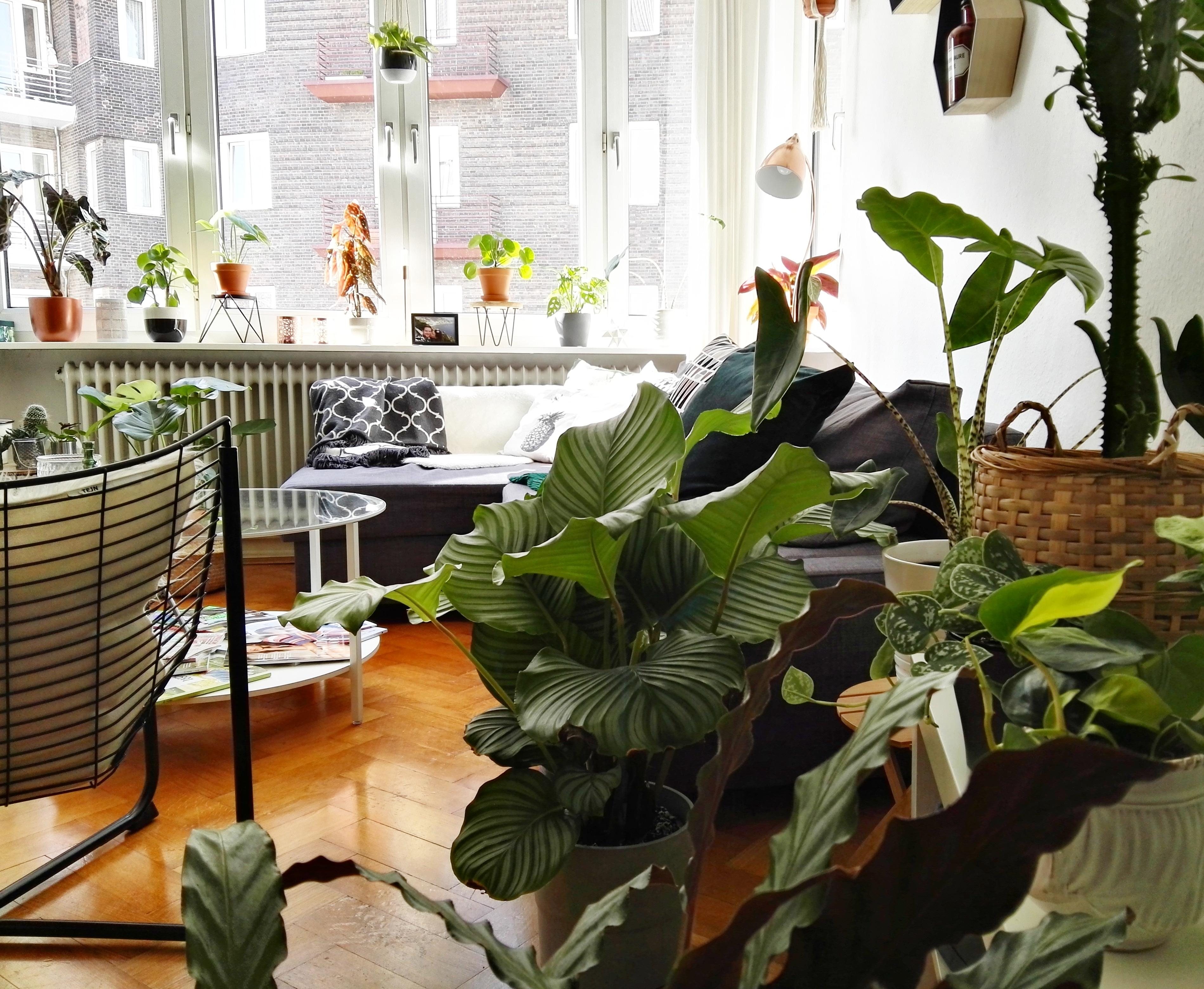 Pflanzen Teil 1 #interior #livingroom #urbanjungle #plantlover