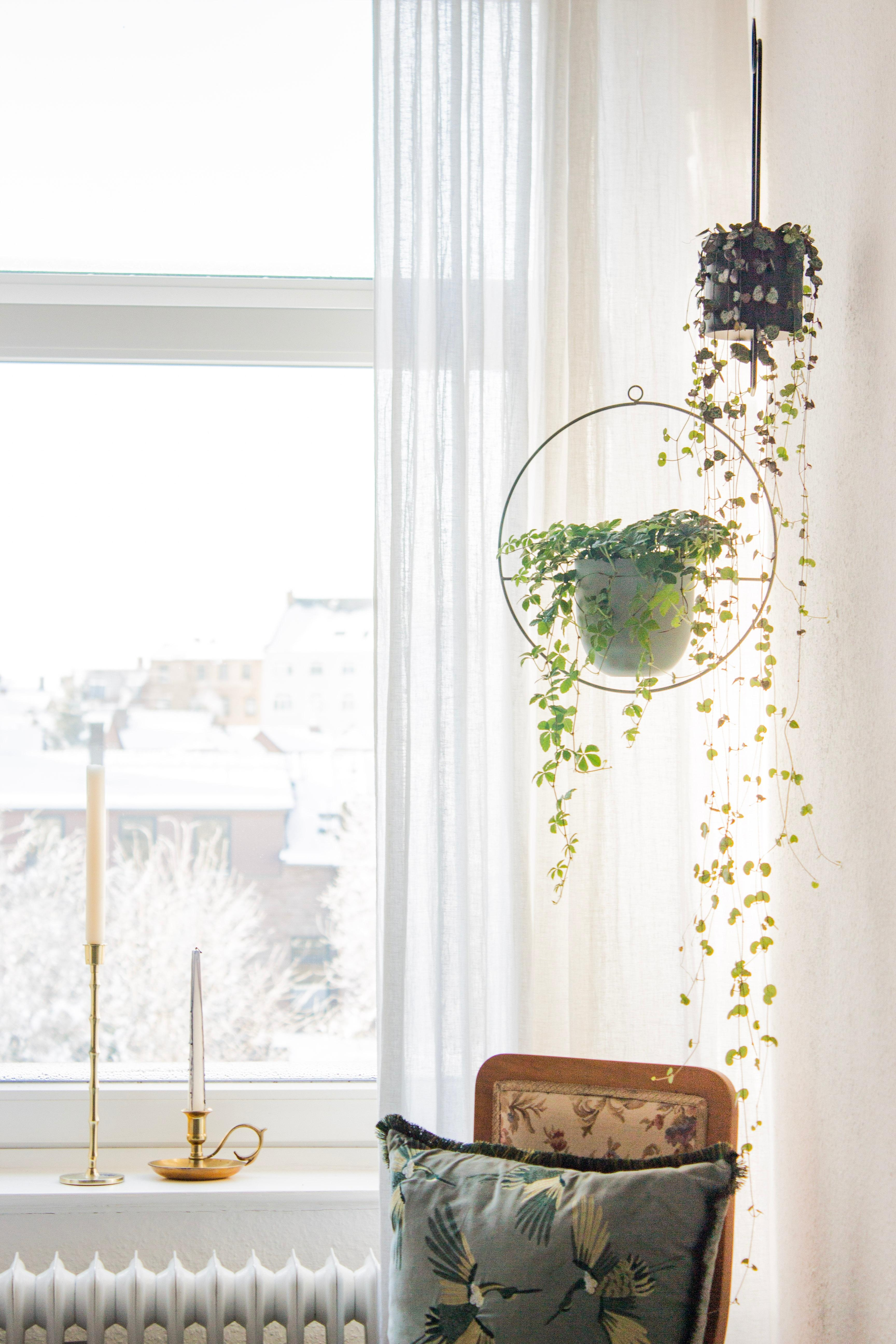 #pflanzenliebe #plantlove #sunshine #morningglory #bedroom #schlafzimmer #hangingplants
