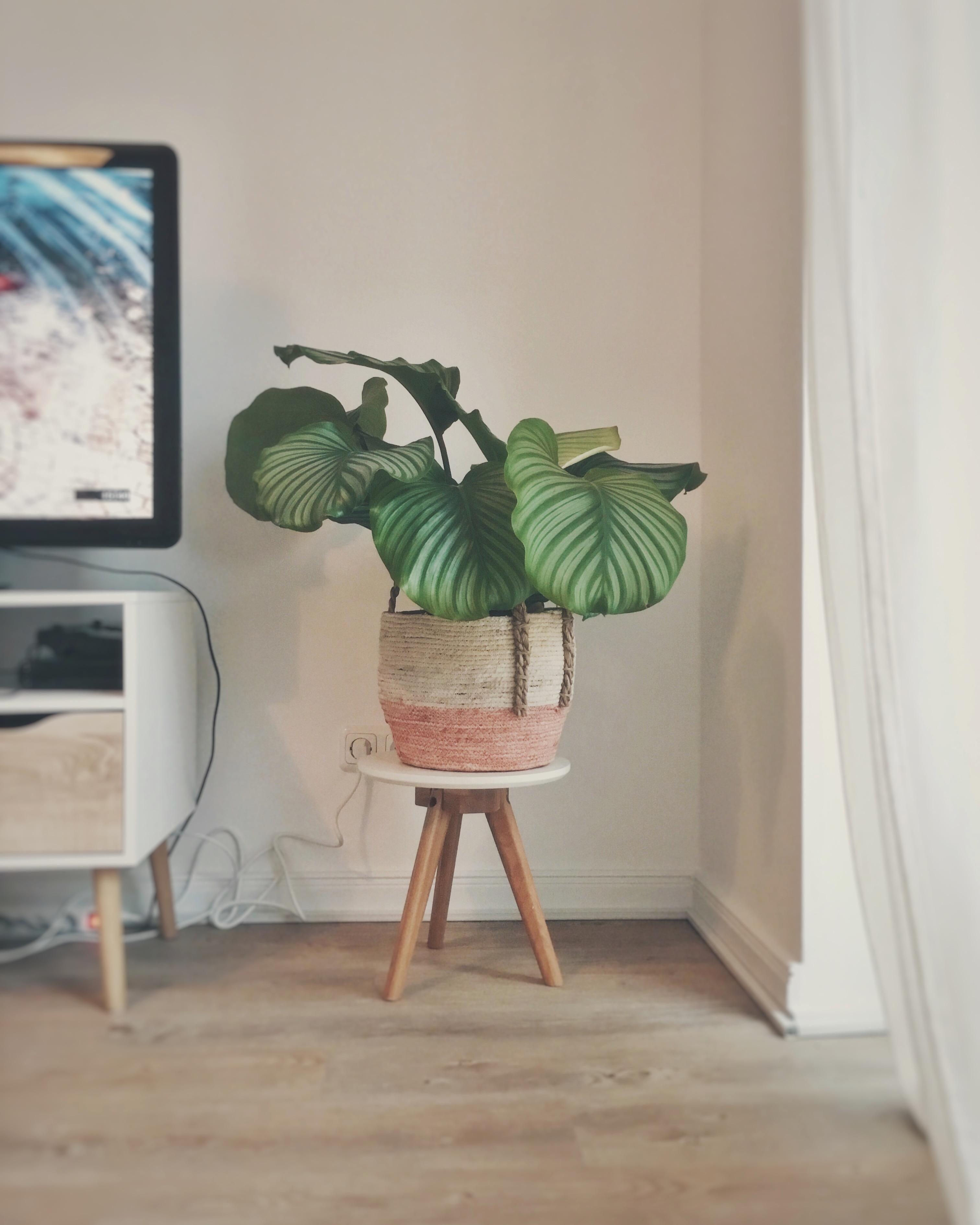 Nett wohnzimmer pflanzen galerie die kinderzimmer design for Wandgarten wohnzimmer