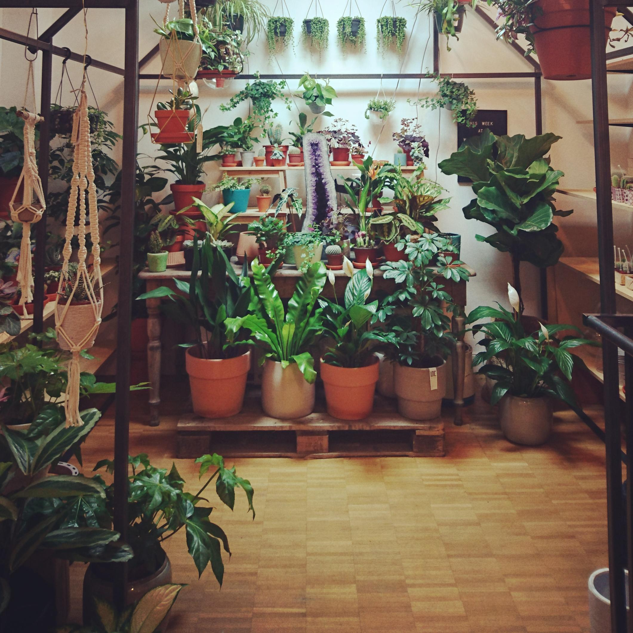plant paradise 🌿 #winkelvansinkel #urbanjungle #greenery #shopping
