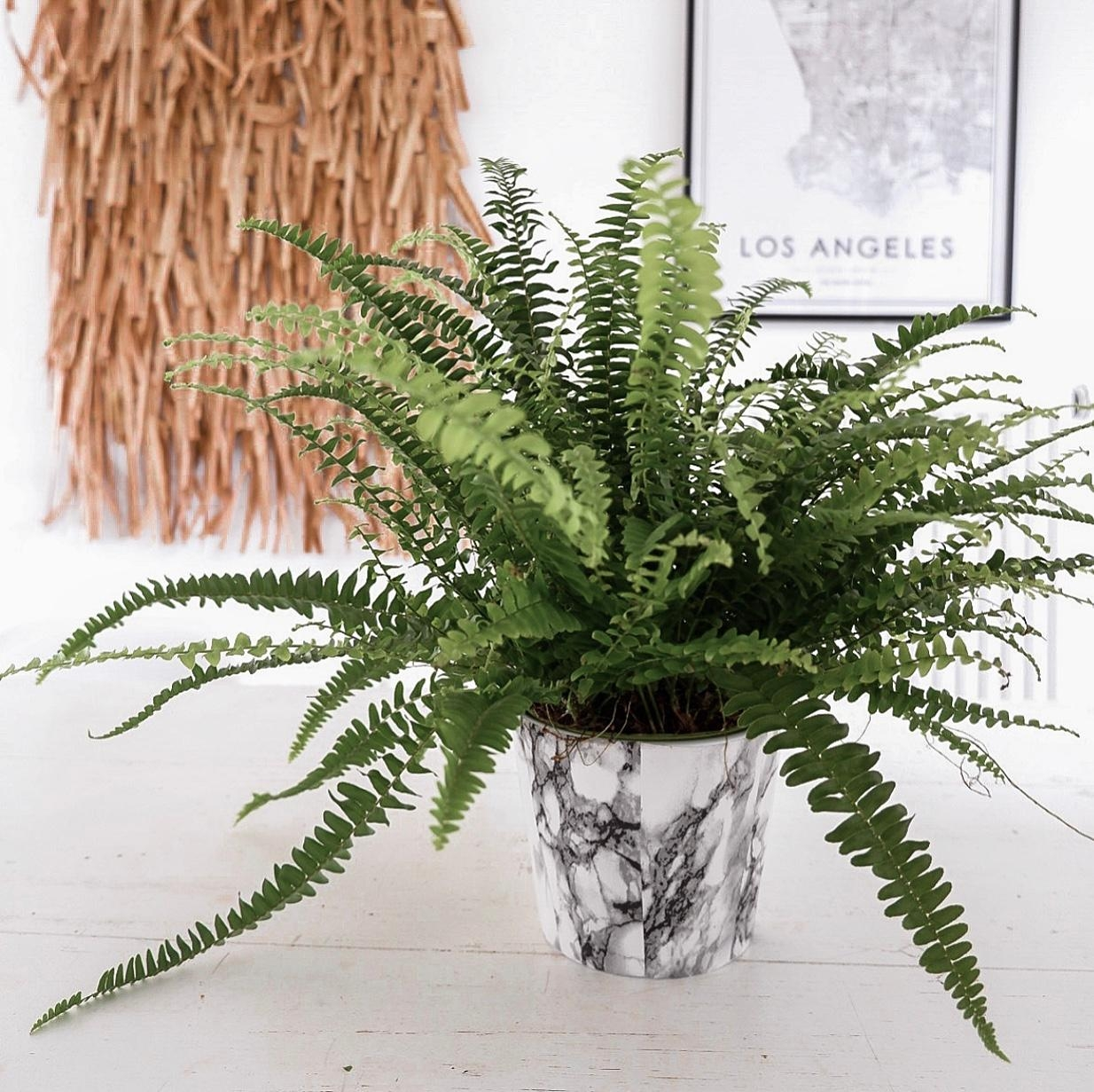 Plant Power🌿🌿🌿