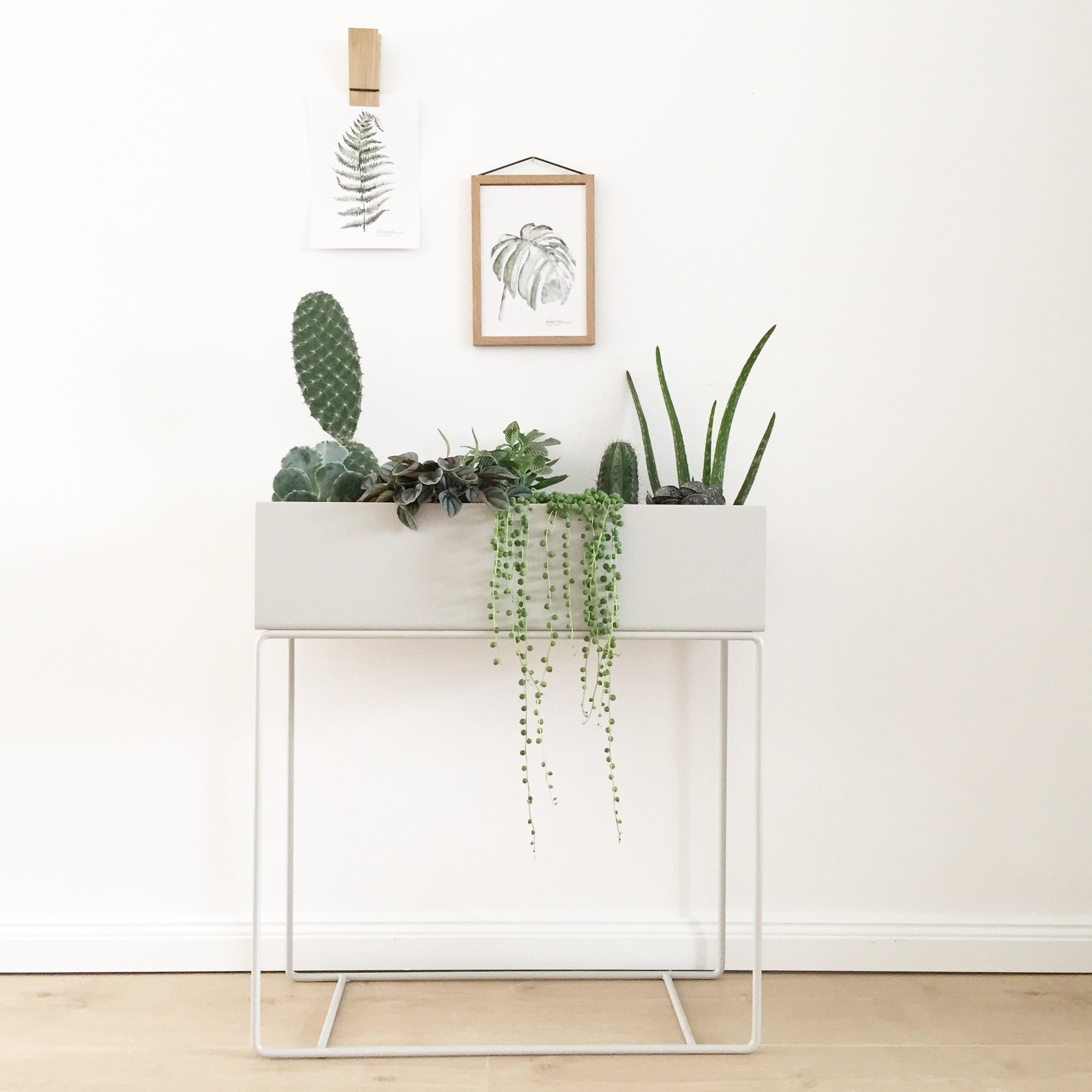 Plantgang ♡ #plantgang #planzbox #fermliving #urbanjungle #wohneningrün #scandi