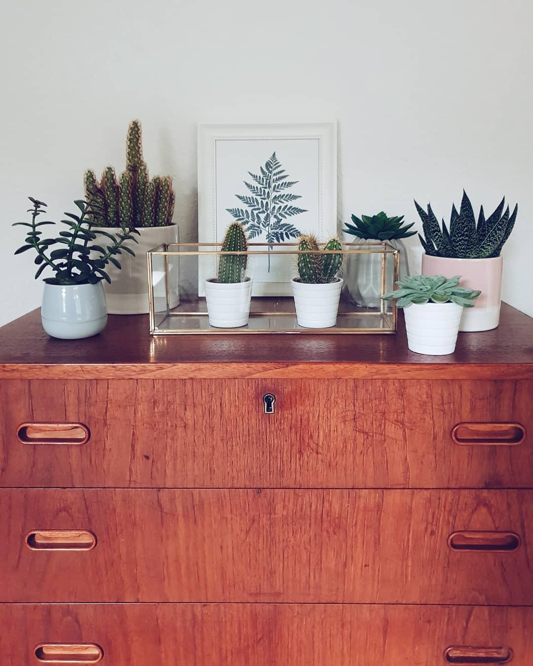#plantgang #plantlover #urbanjungle #greenliving #greeninspo #cactus #succulents #plants #grün #interior #decoration #homedetails