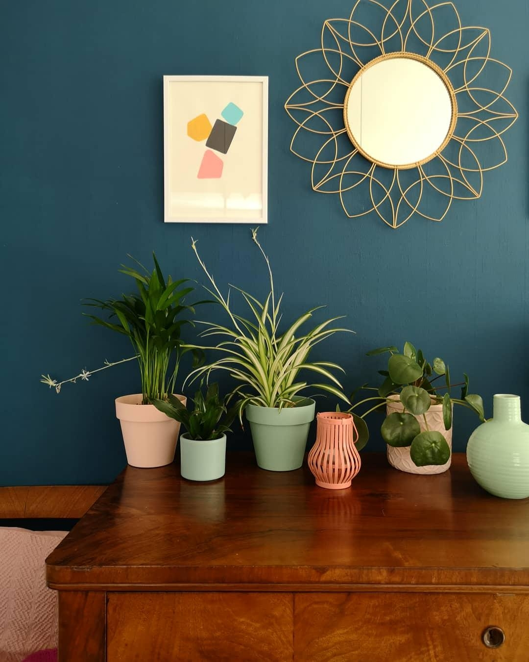 Plantgang🌿