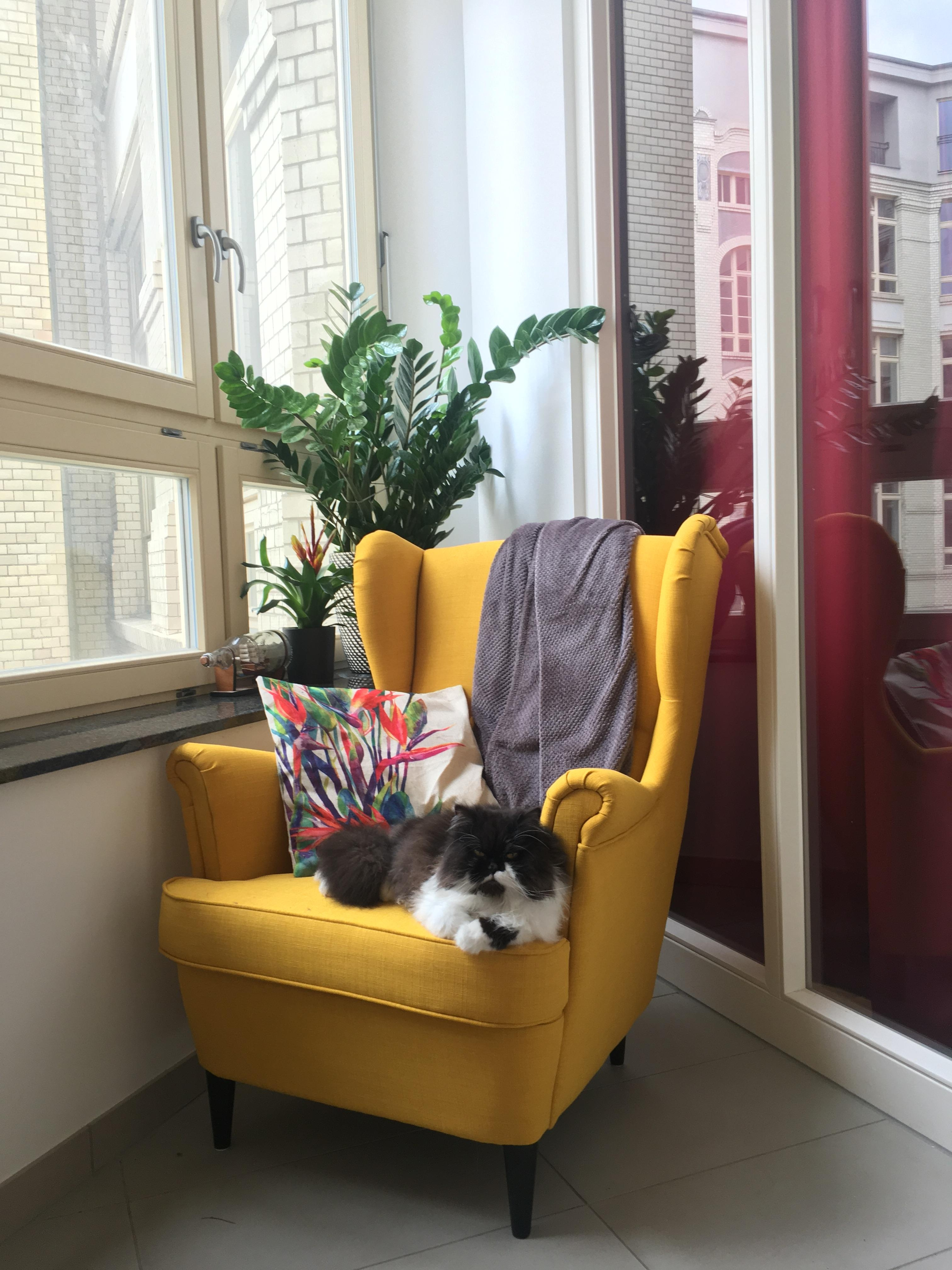 #plantlady #catmom #homeiswhereyourcatis #home #ohrensessel #lesezimmer #loggia