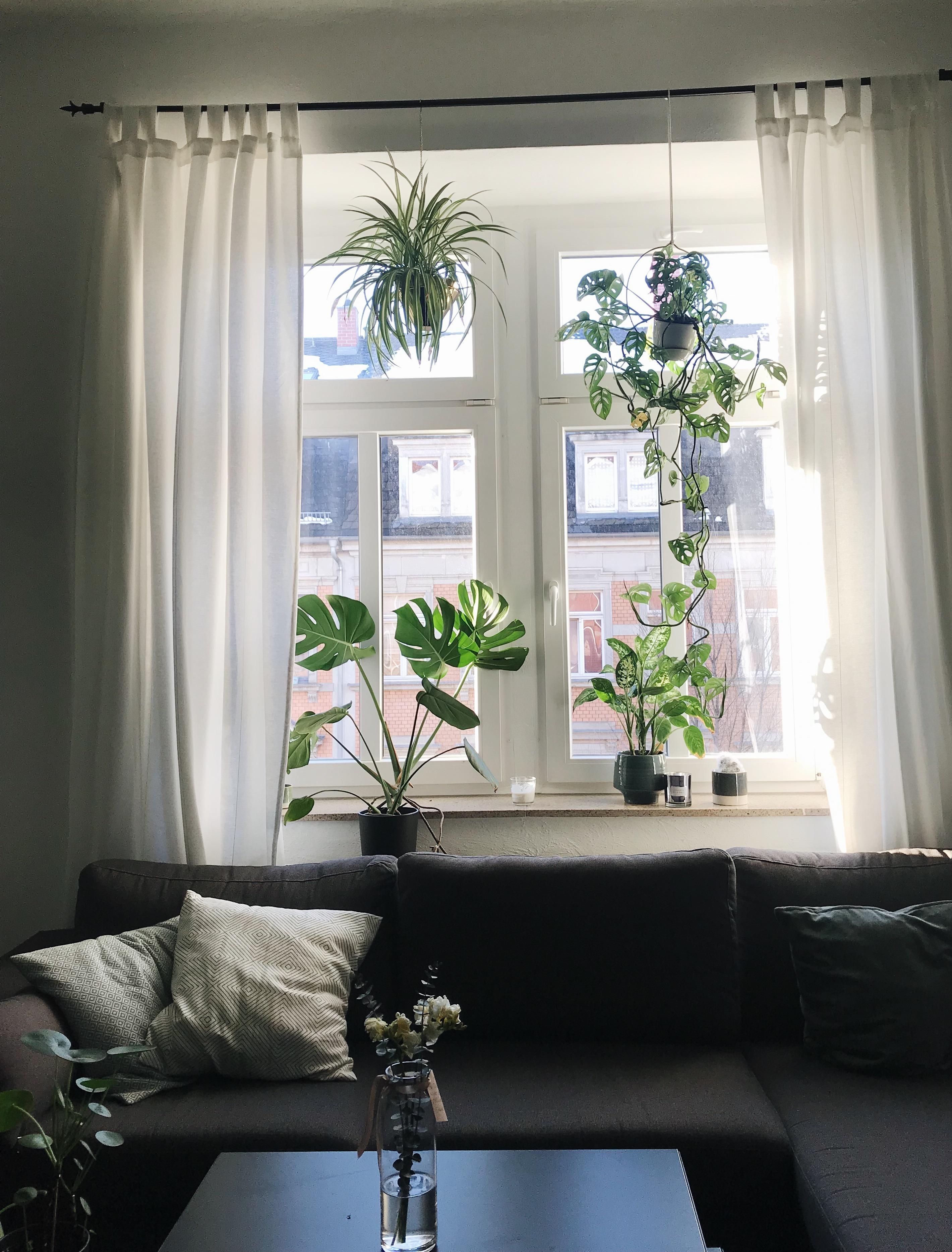 Pflanzen wohnzimmer pflanzen dekoration wohnzimmer of for Pflanzen fur wohnzimmer