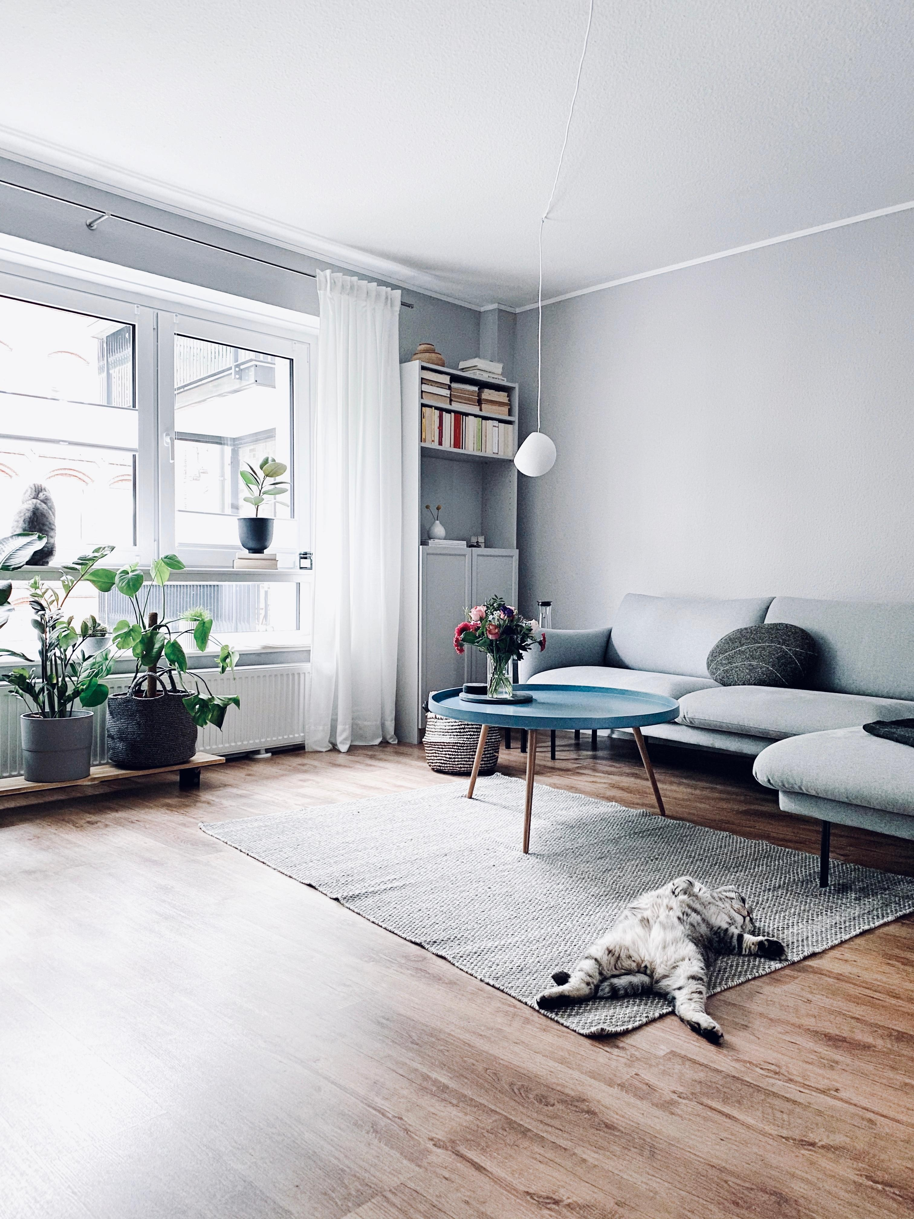 #plantlover #pflanzenliebe #livingroom #catlover #hygge #nordichome