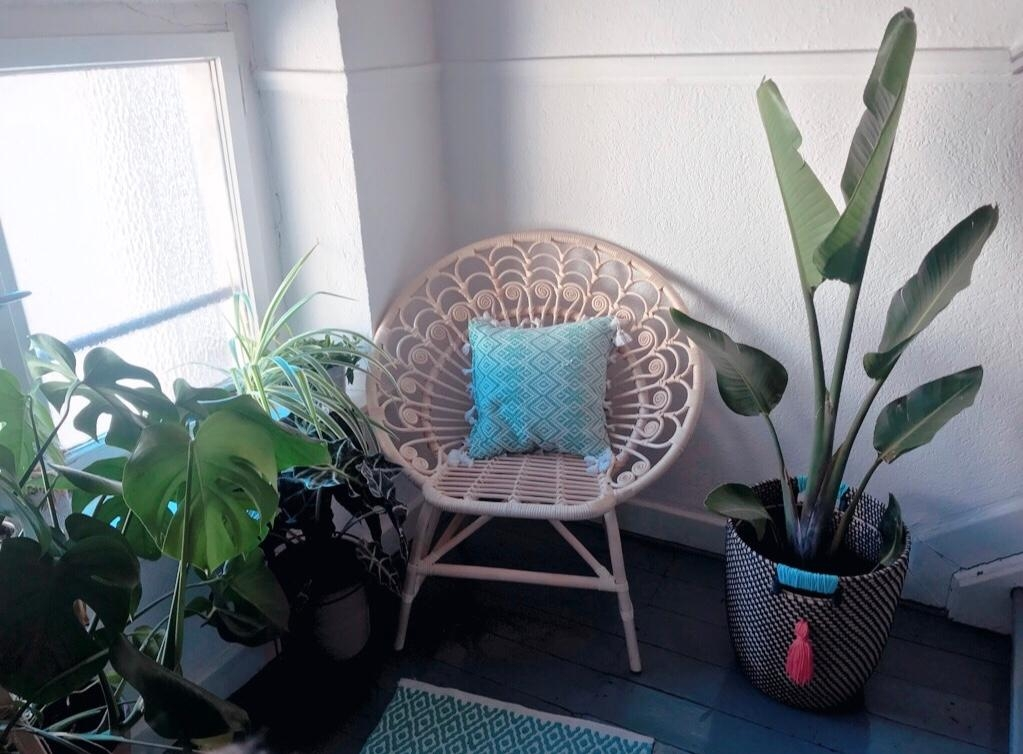 #plants #chair #greens