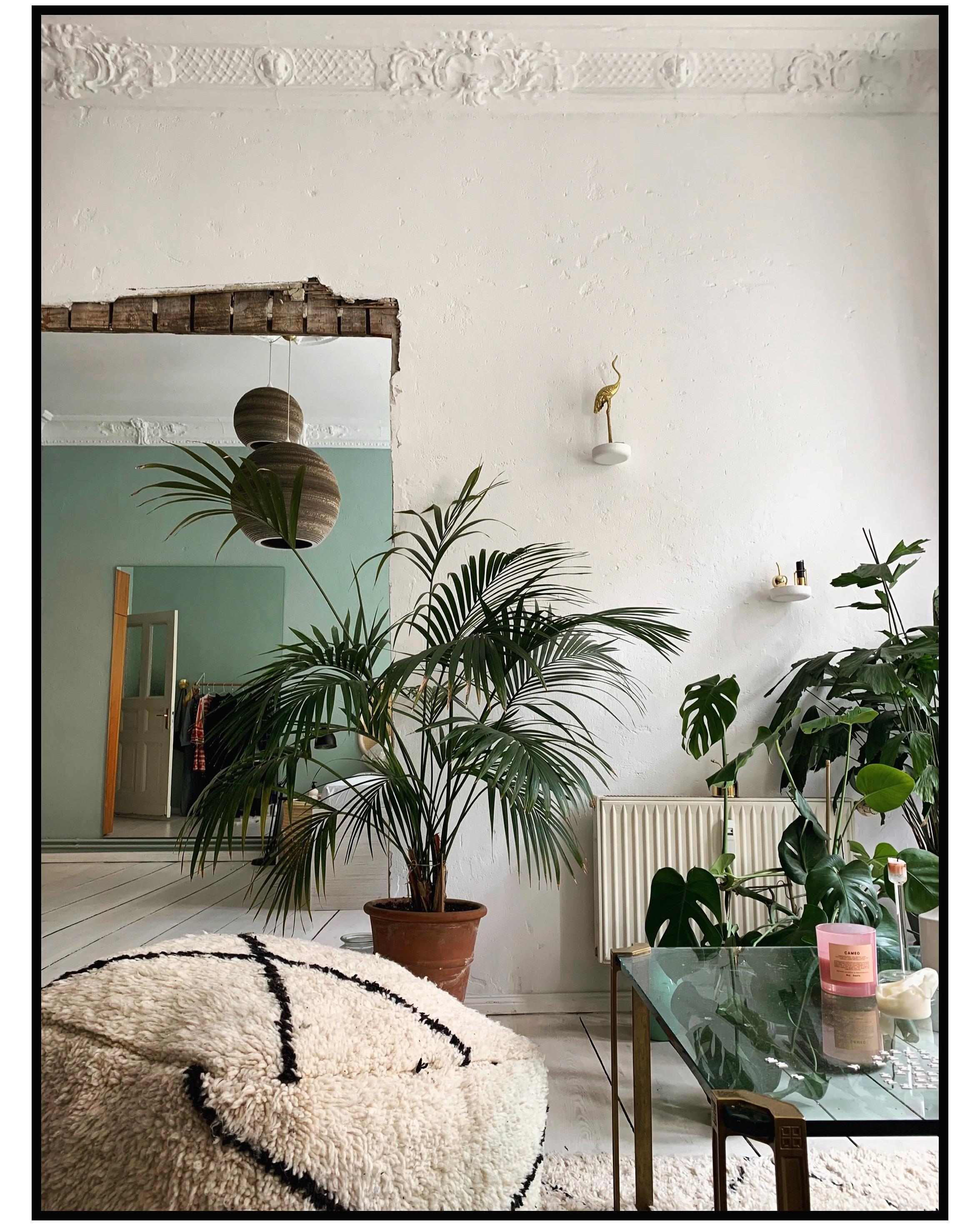 #plants #love #livingroom