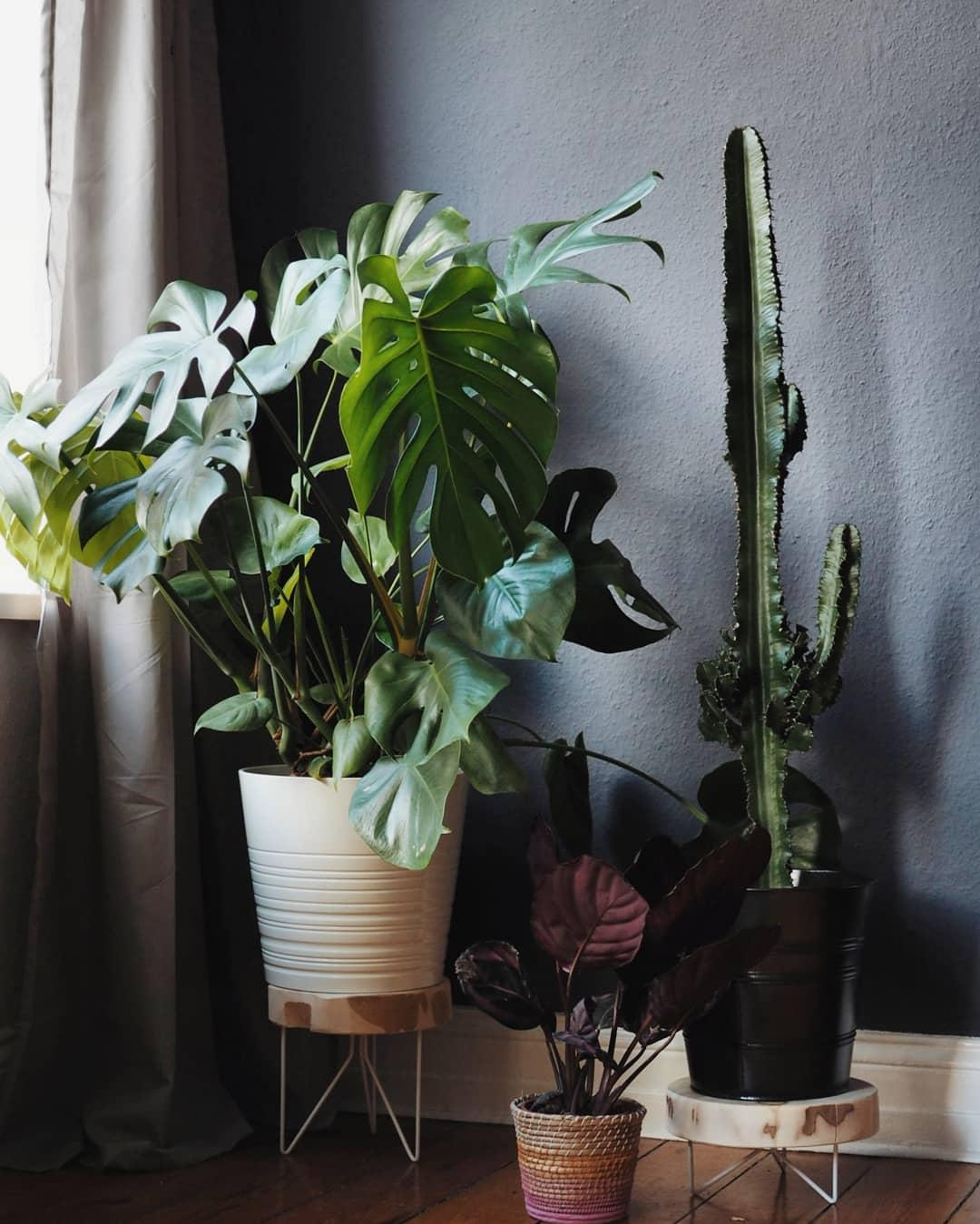 Plants make people happy. 