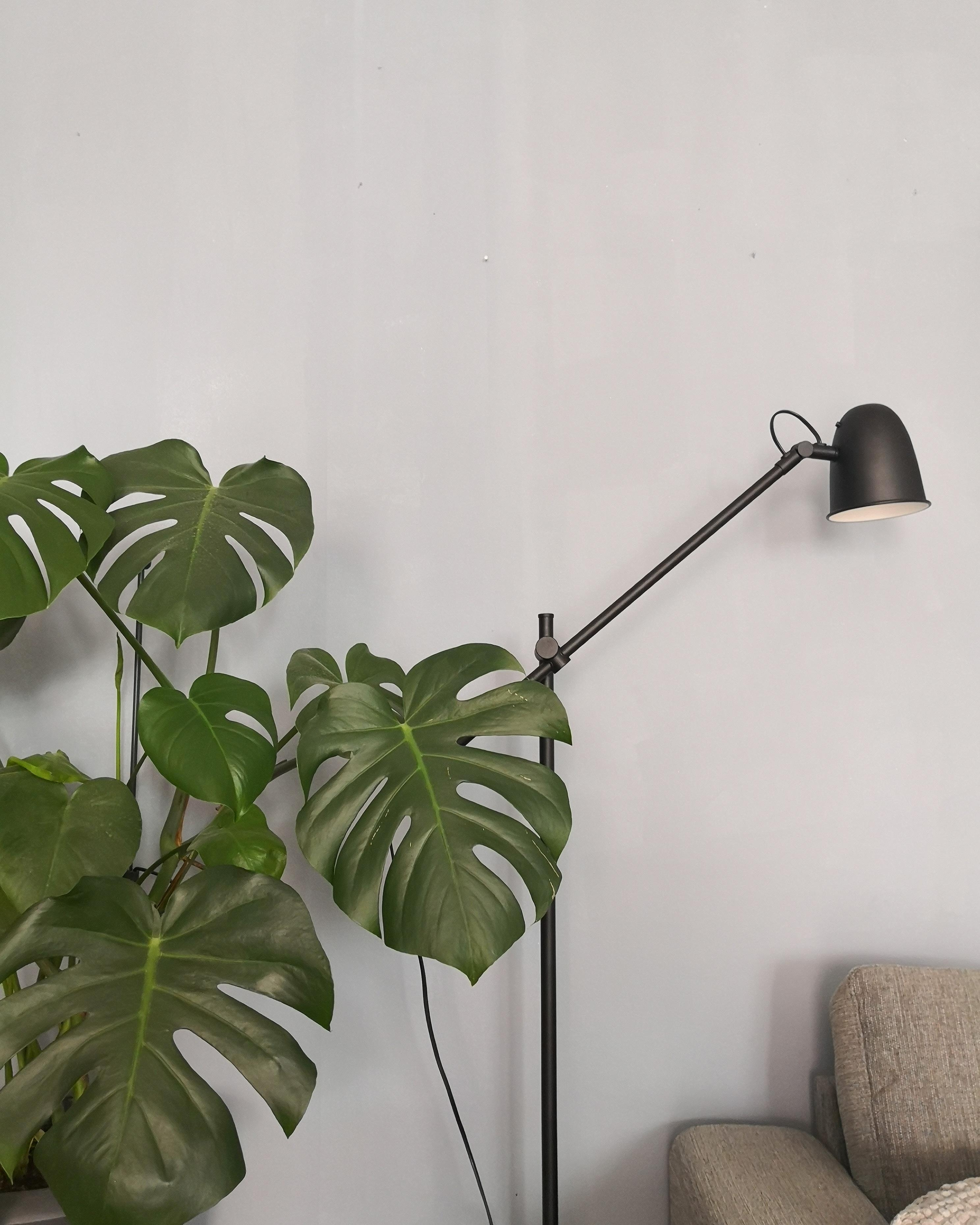 #plants #monstera #minimalism #view #livingroom