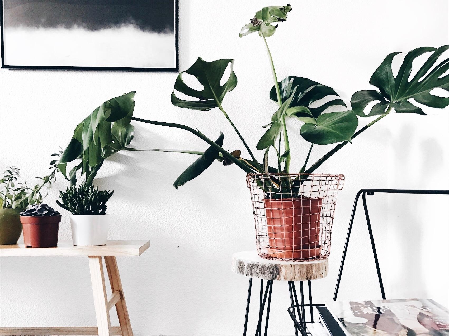 #plants #monstera #wohnzimmer #details #living #cozy #home #interior #couchliebt