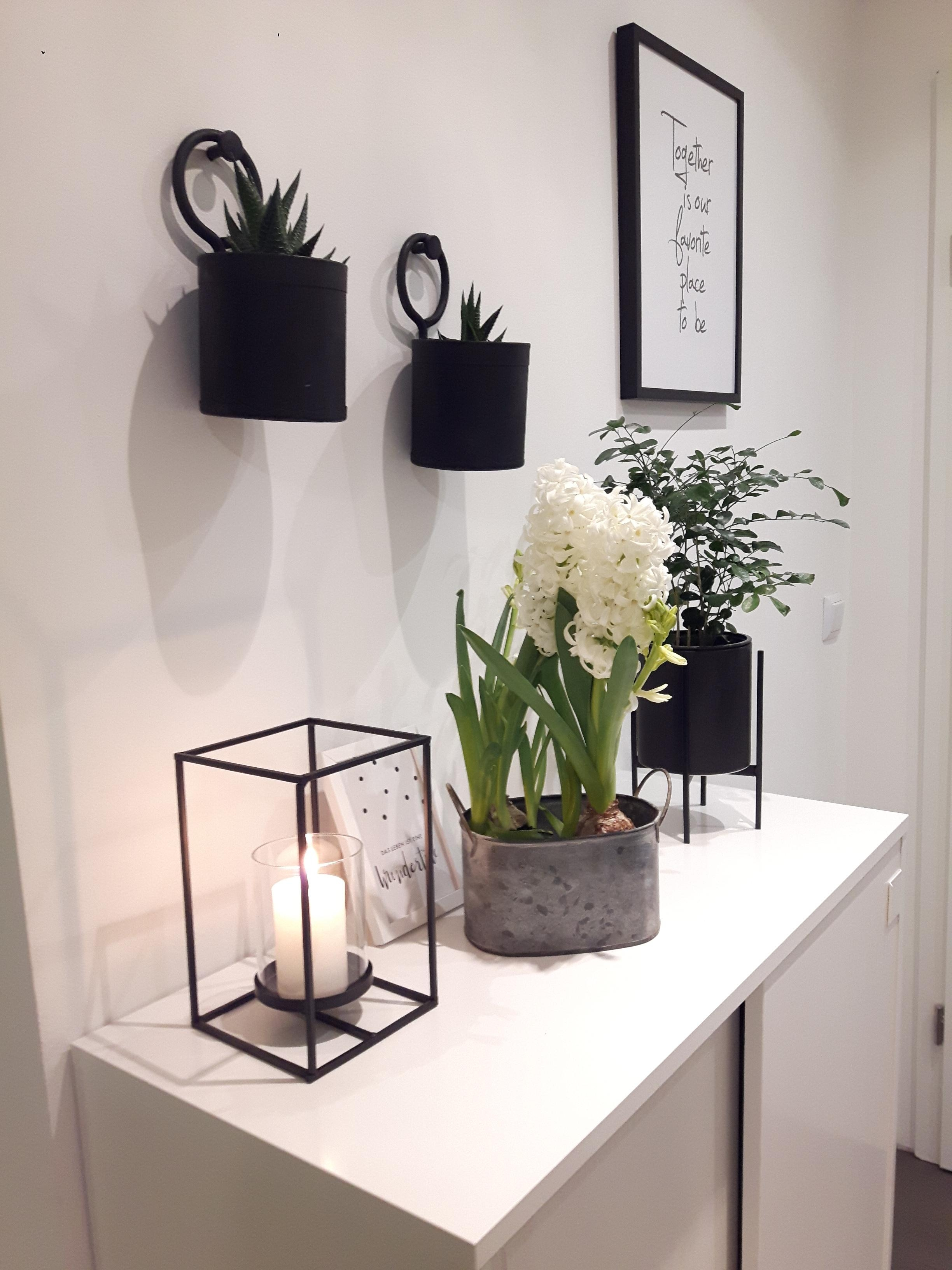 Plants whiteliving whiteinterior nordic scandistyle  65e6ffe1 07a0 4b62 94cd 069603111d95
