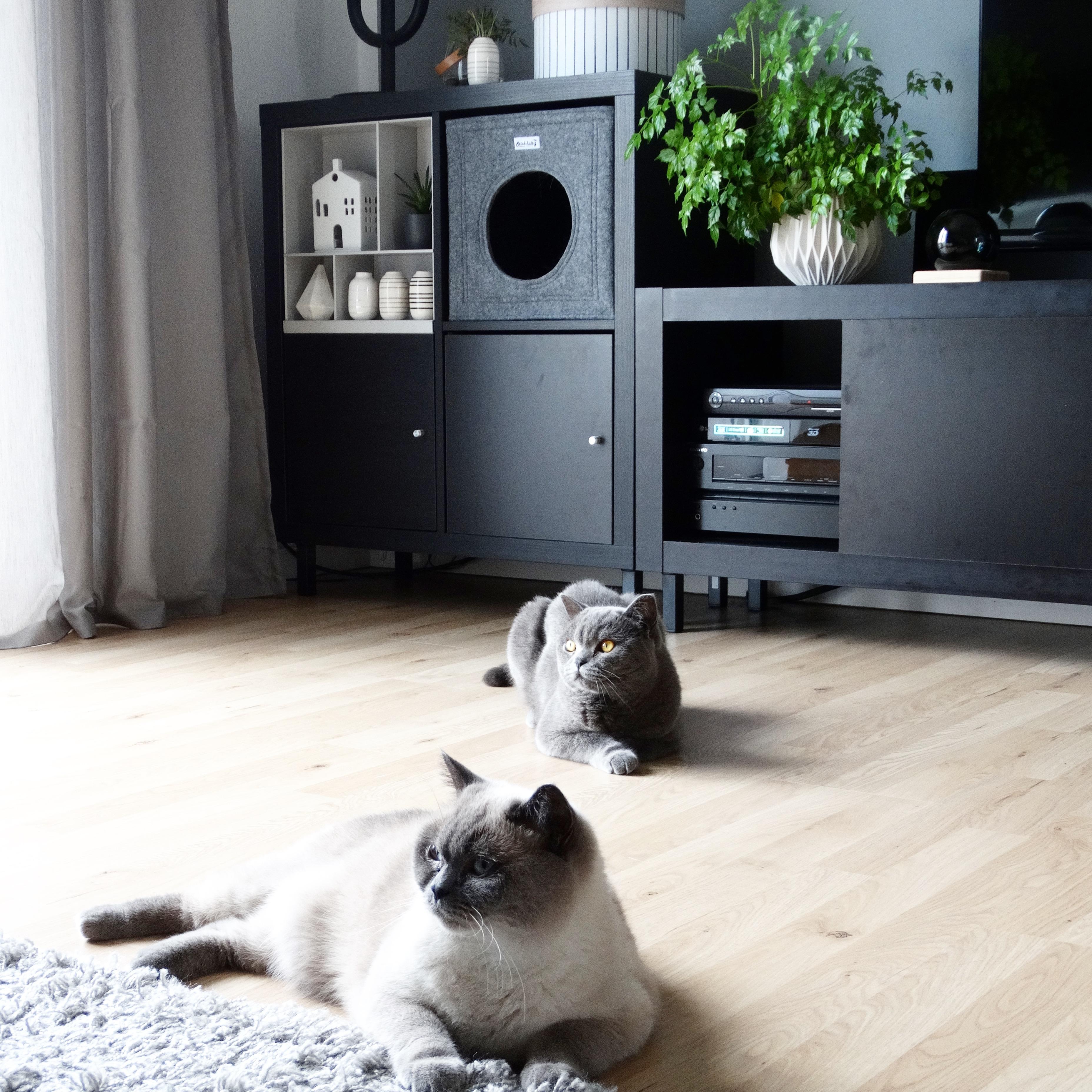 ikea expedit • bilder & ideen • couch