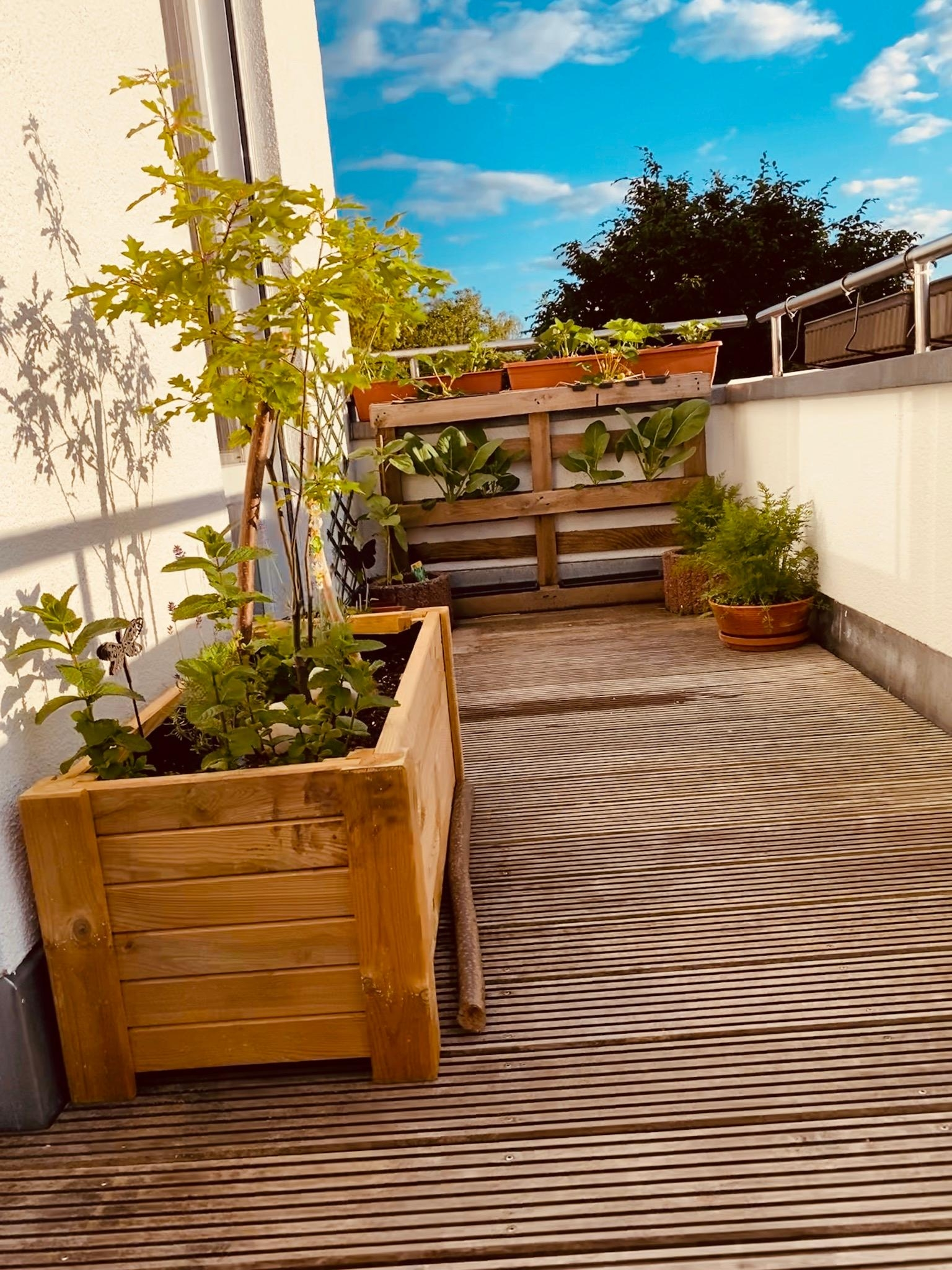 #rooftop #gardening #summertime #relaxzone #enjoyoutdoors #plantlover
