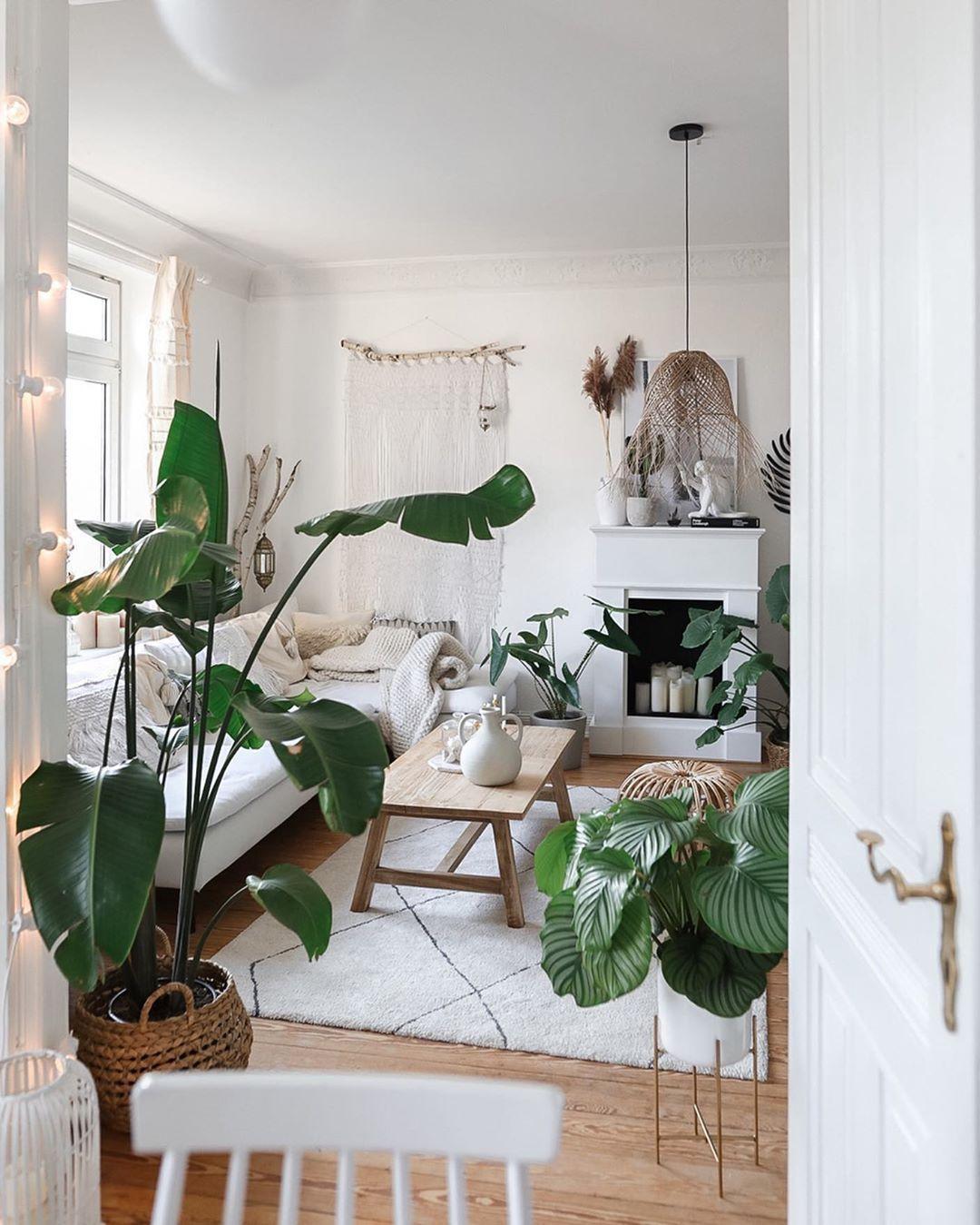 Pflanzen • Bilder & Ideen • COUCH