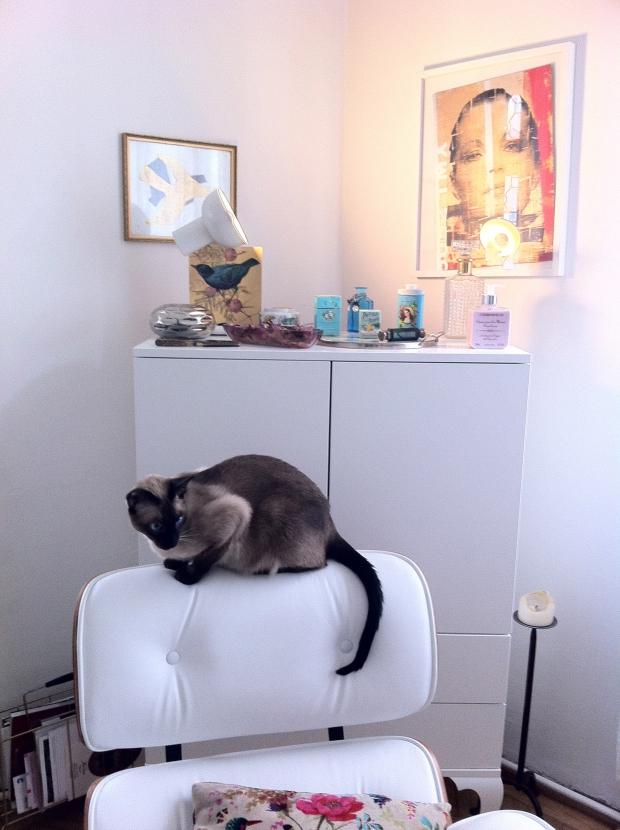 Siam Kater Eames auf unserem Eames Chair #homestory