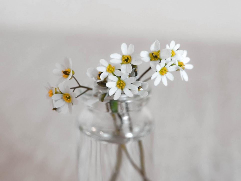 #simplicity #flowers