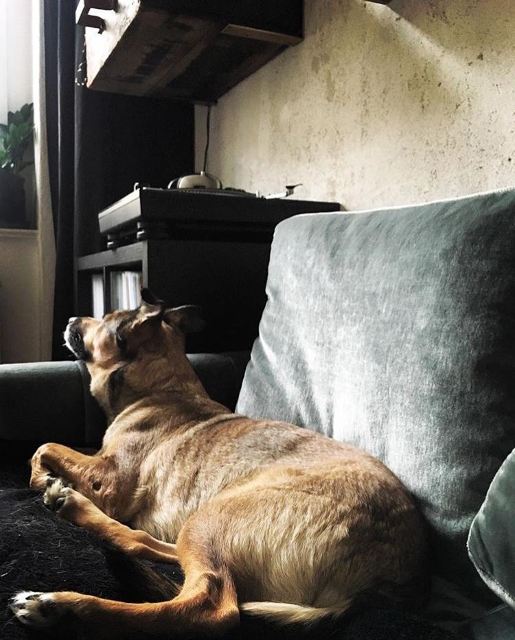 #sofa #livingchallenge #dog #vintage #couchliebt
