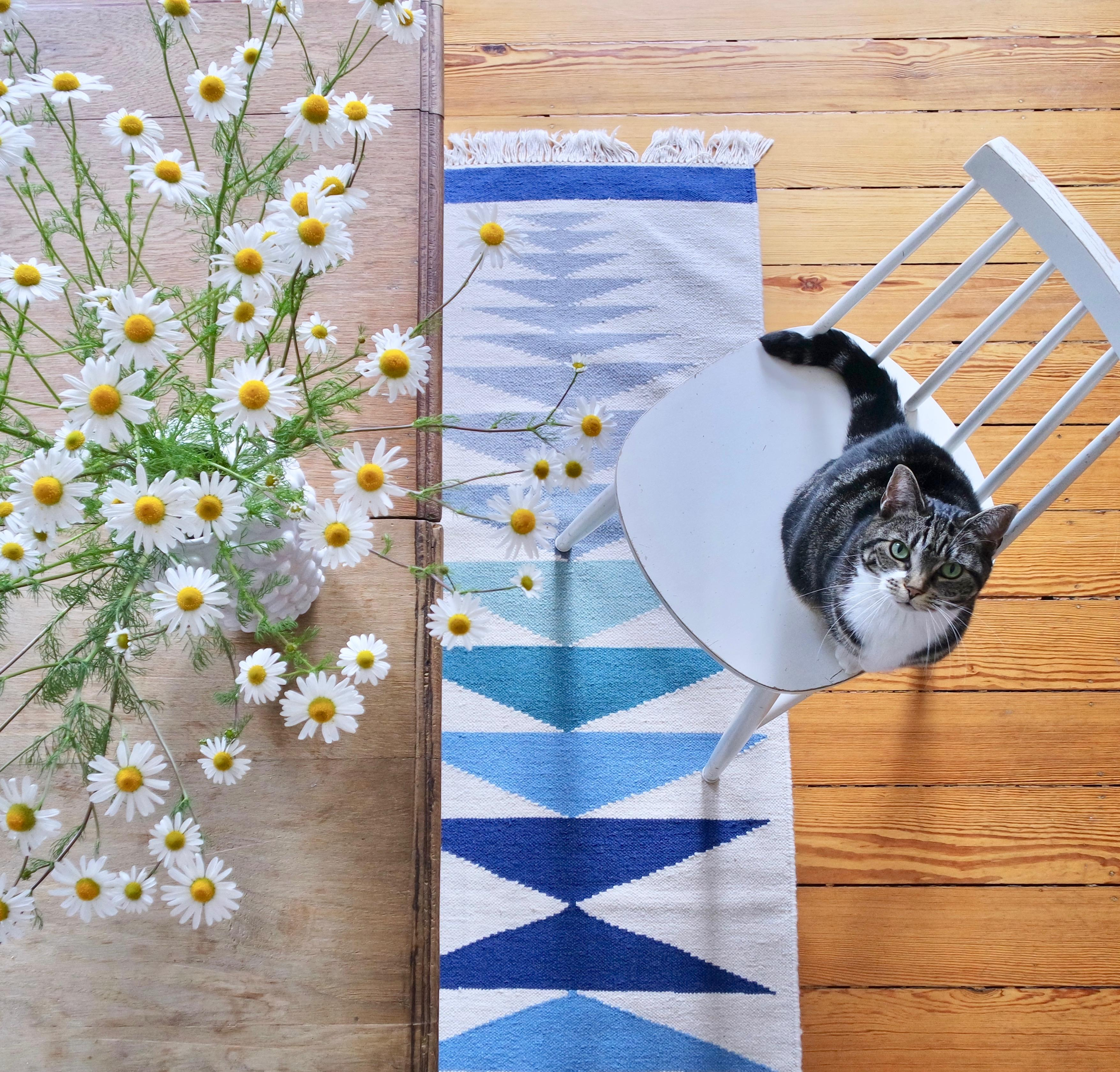 Sommer, frische Kamille in der Vase und Jenne. Was will man mehr? :)
