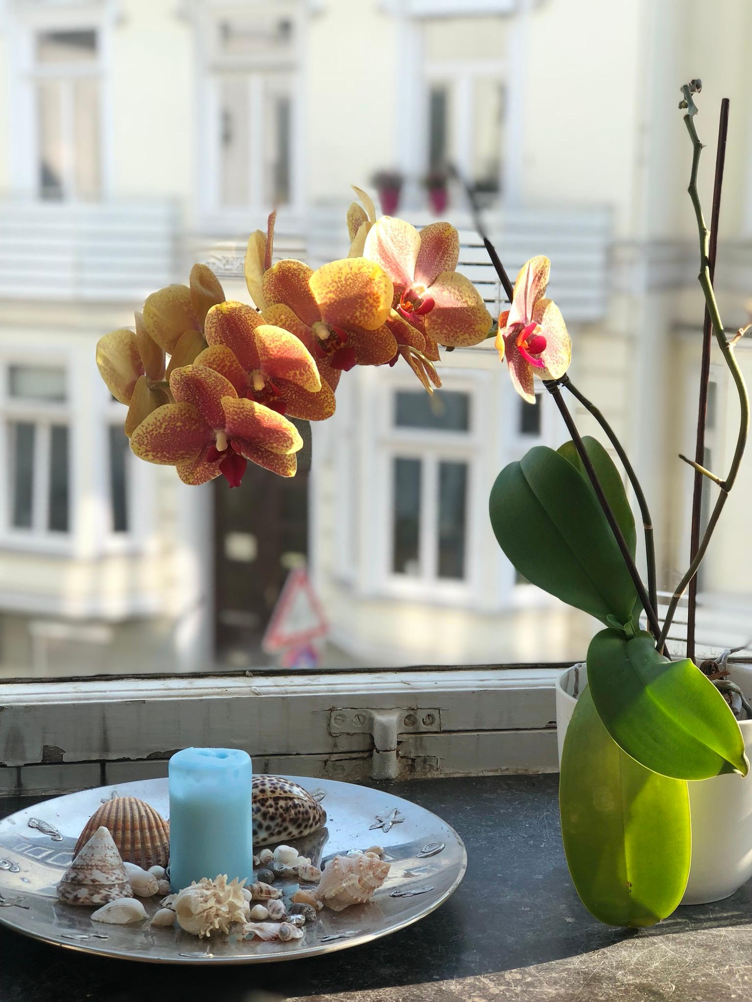 Stay Home 🌸 #view #home #vondirinpririert #flower