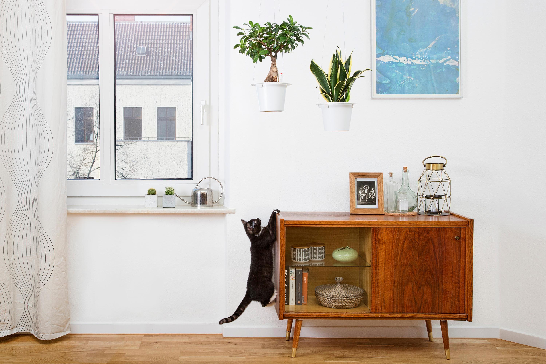 Katzenmöbel katzenmöbel bilder ideen couchstyle