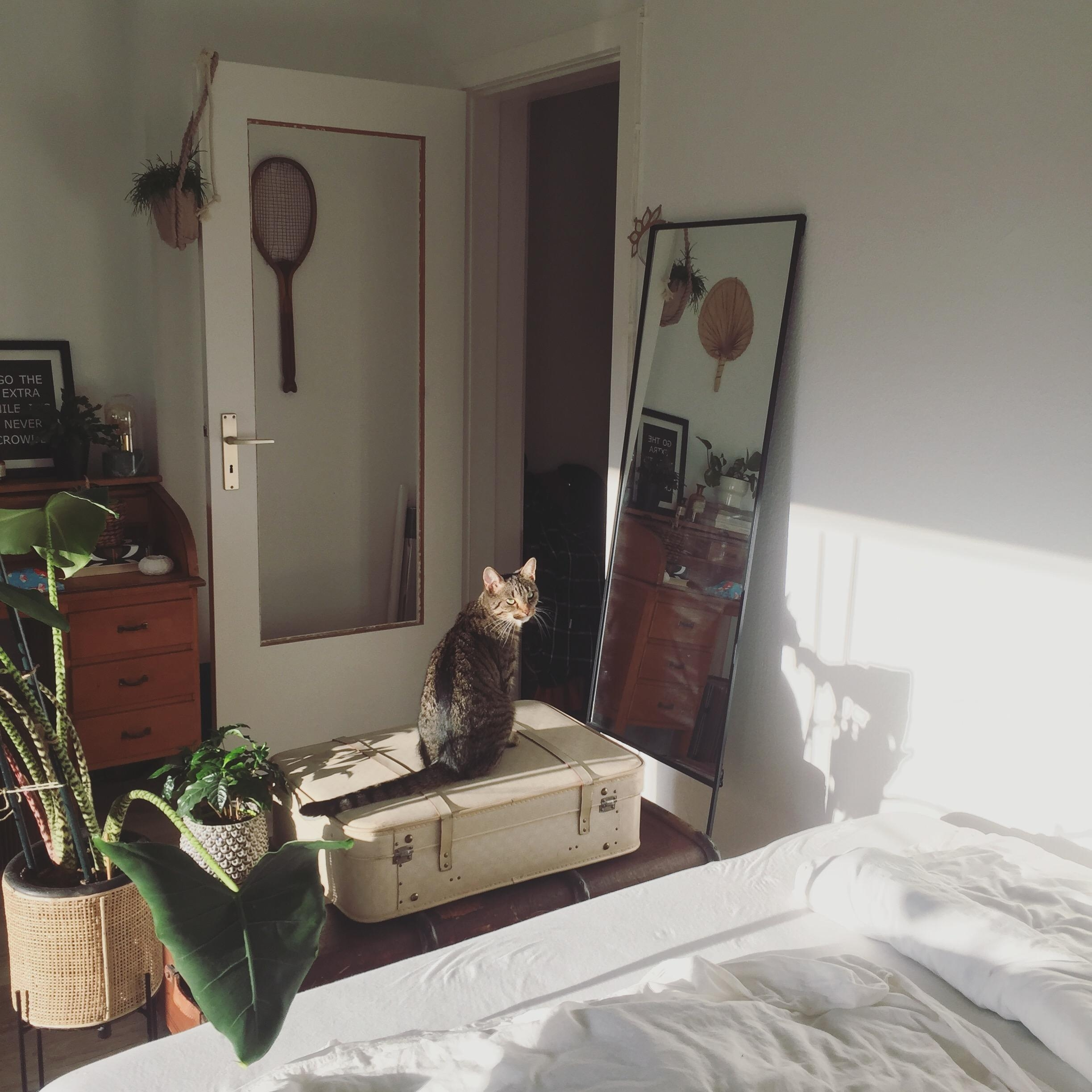 Sunlight in autumn 
