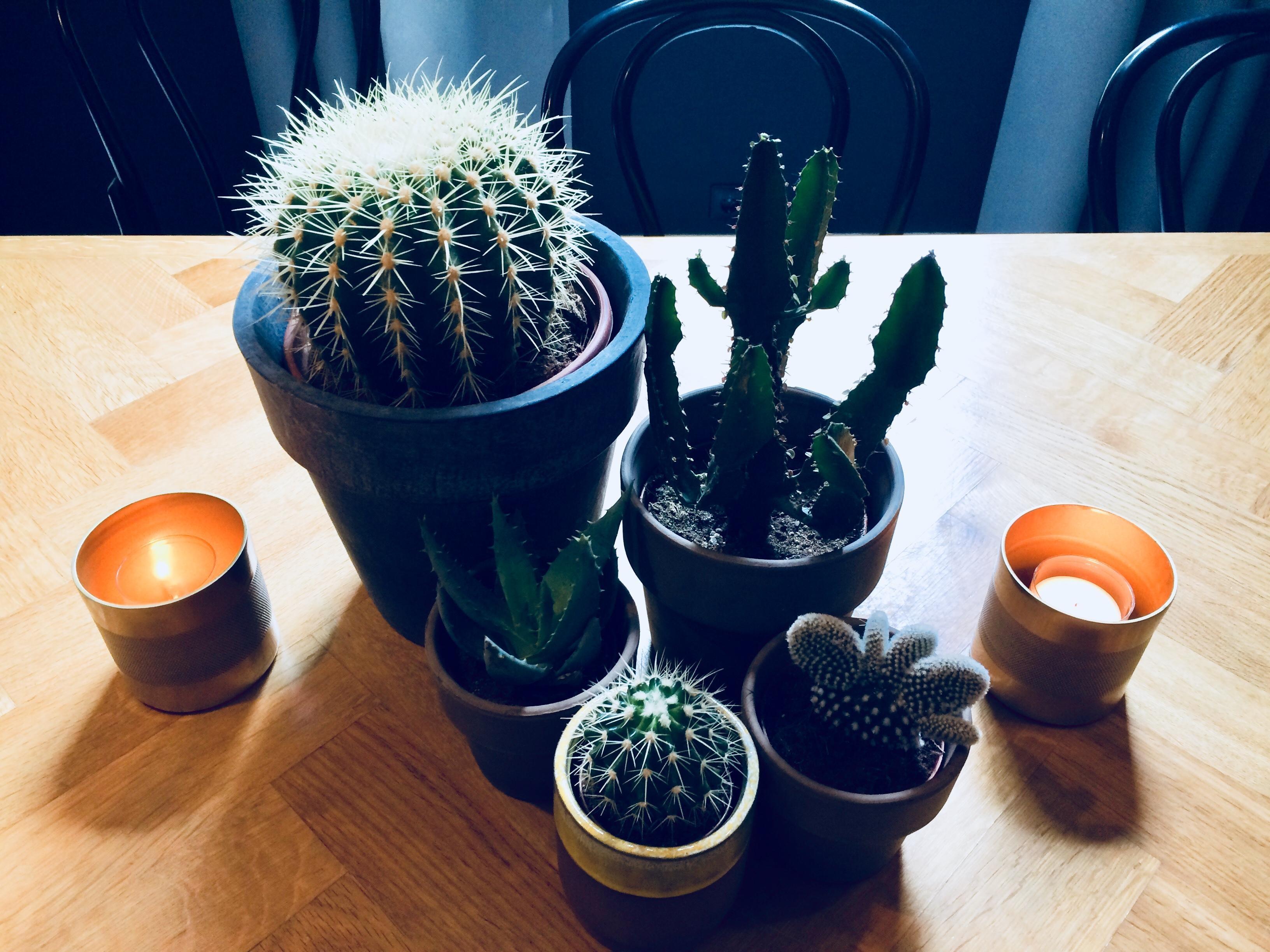 Super Schone Tischdeko Deko Tischdeko Kaktus