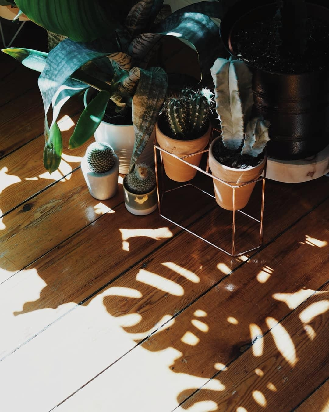Tropical Vibes. 