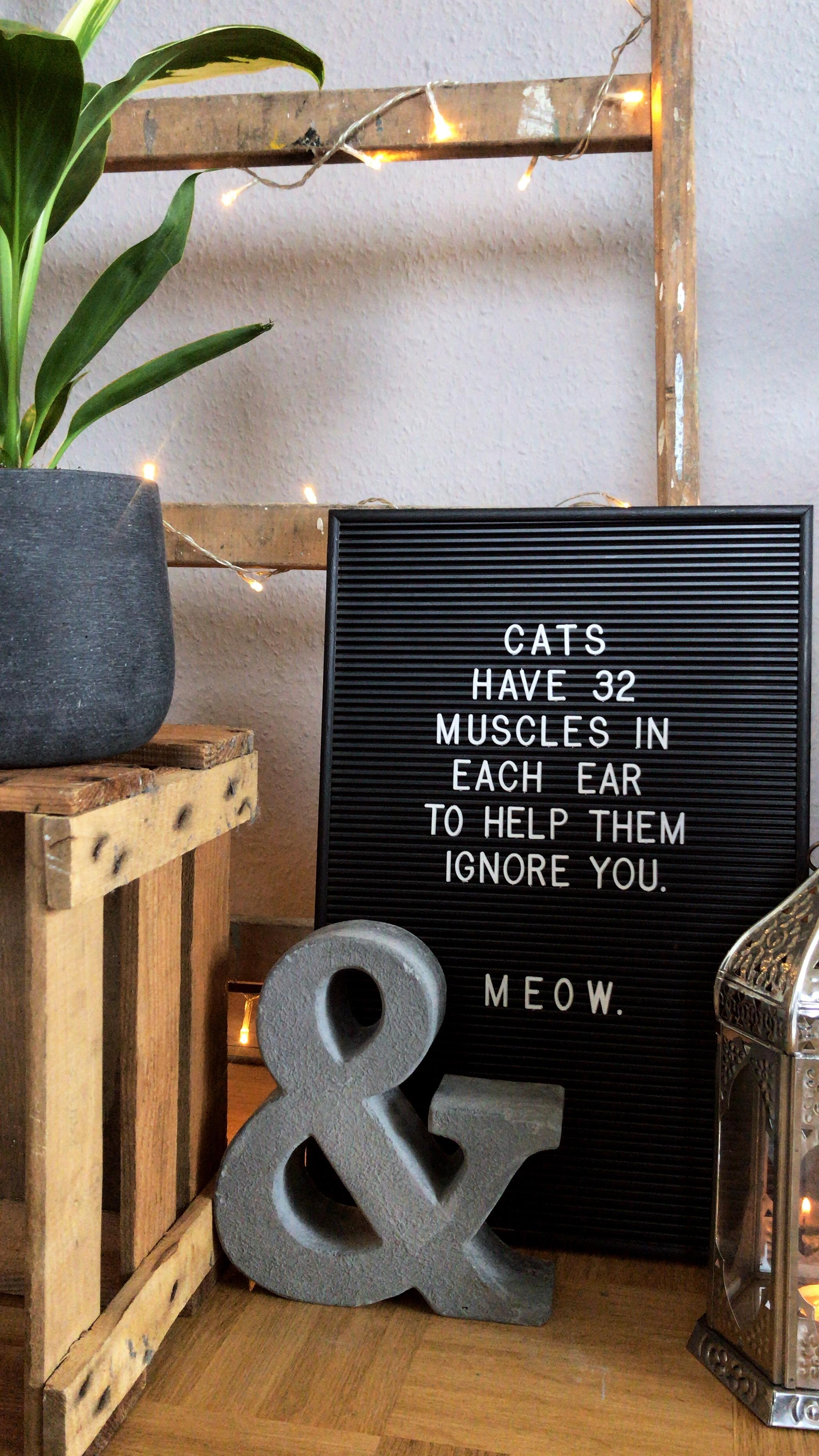 true? true. #cats #letterboard #wood #bohemian #industrial